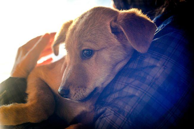 comforting dog.jpg