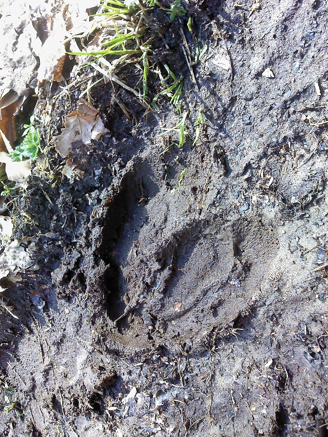 A track left behind by Bullwinkle. Shot on  Magellan eXplorist 610 GPS