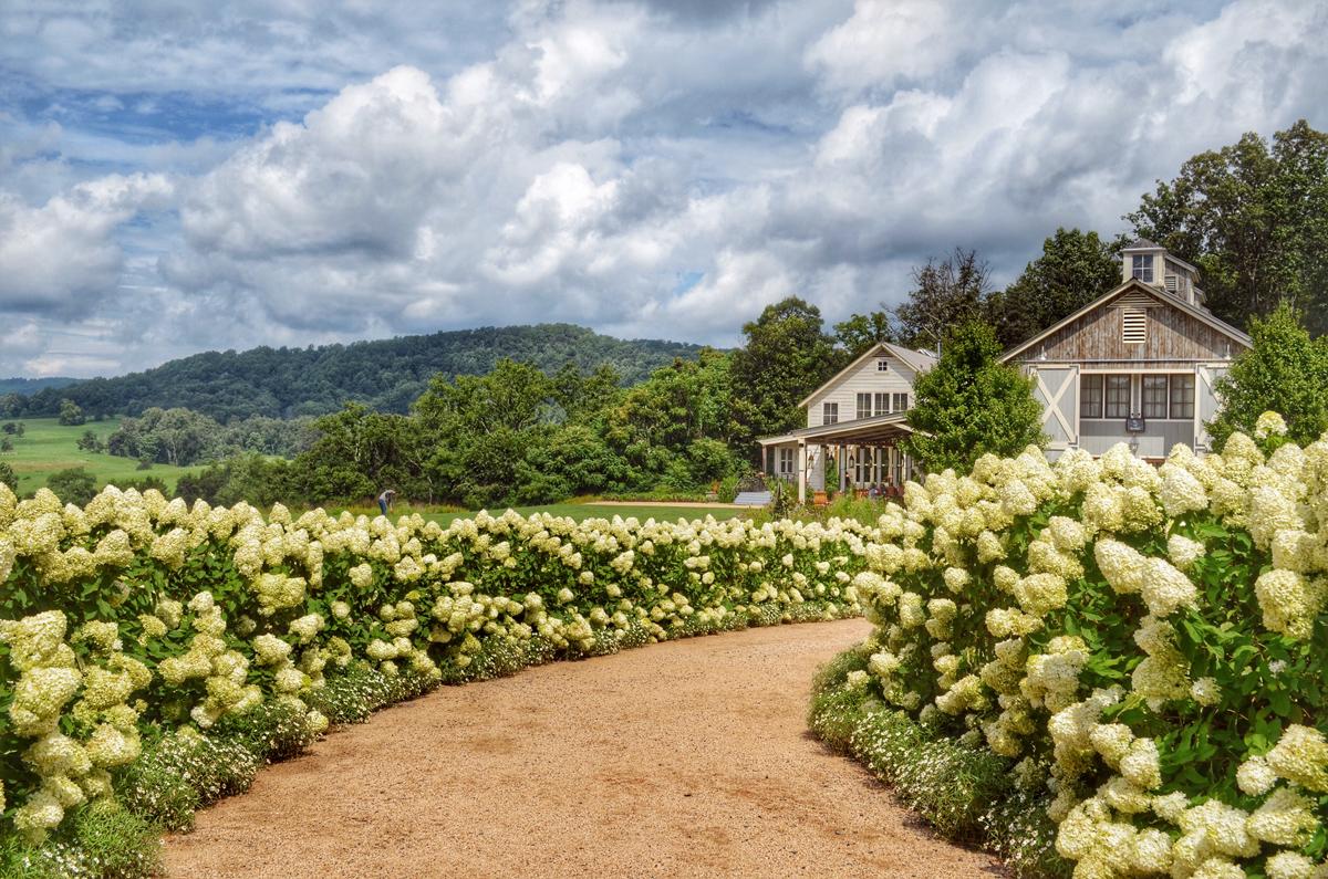 pippin_hill_farm_winery_muhsieninc_v8.jpg