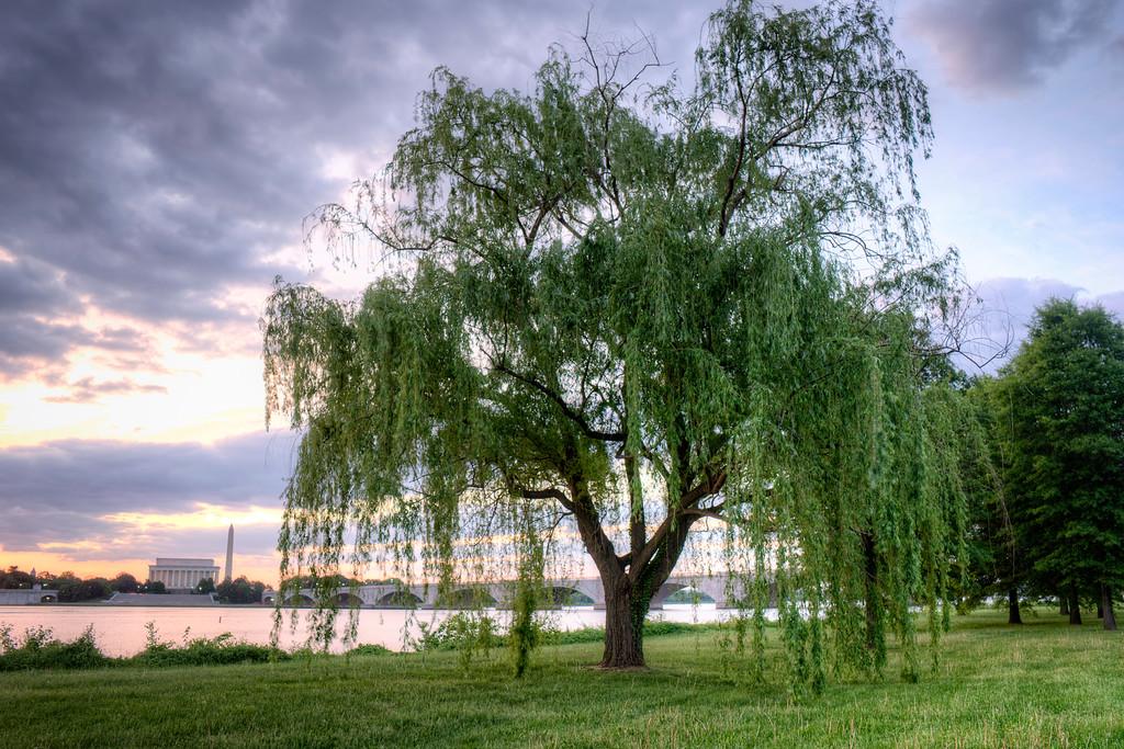 angelapan_willowtree-XL.jpg