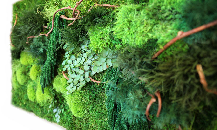 artisan-moss-40x18-natural-vine-plant-art-900x540.jpg
