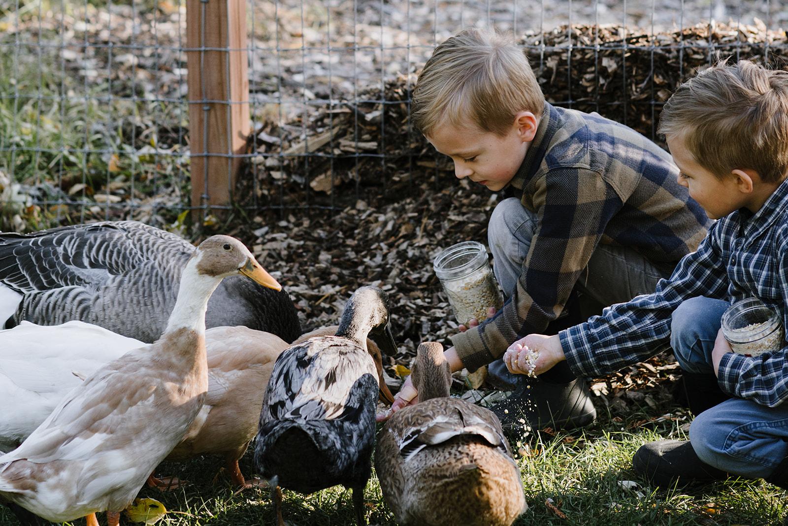 Ducks-11.jpg