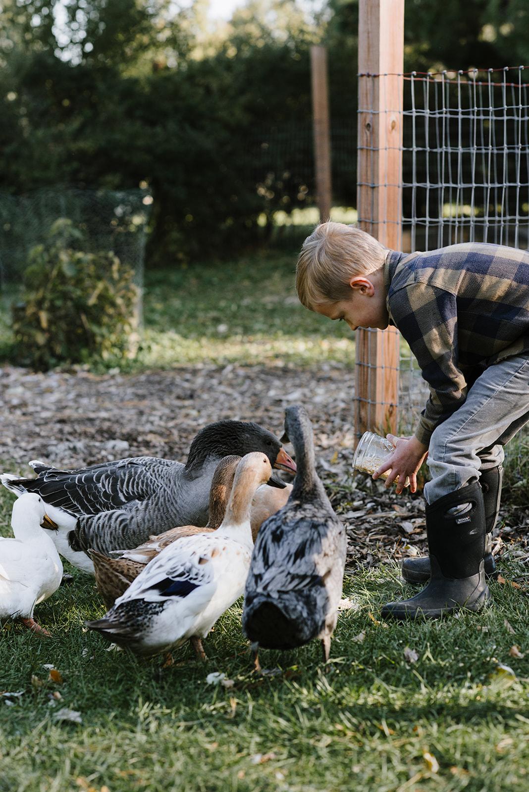 Ducks-15.jpg