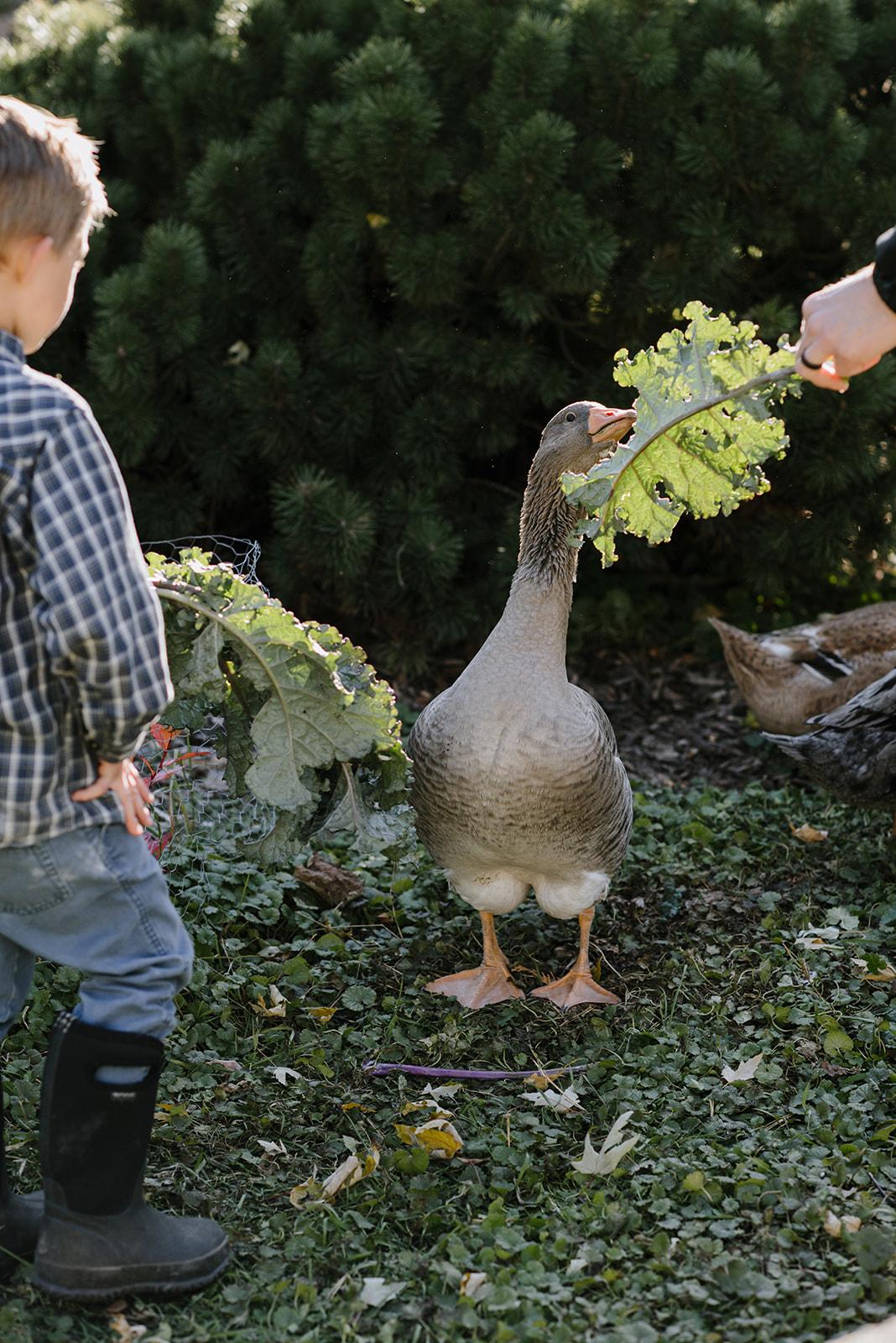 Ducks-65.jpg