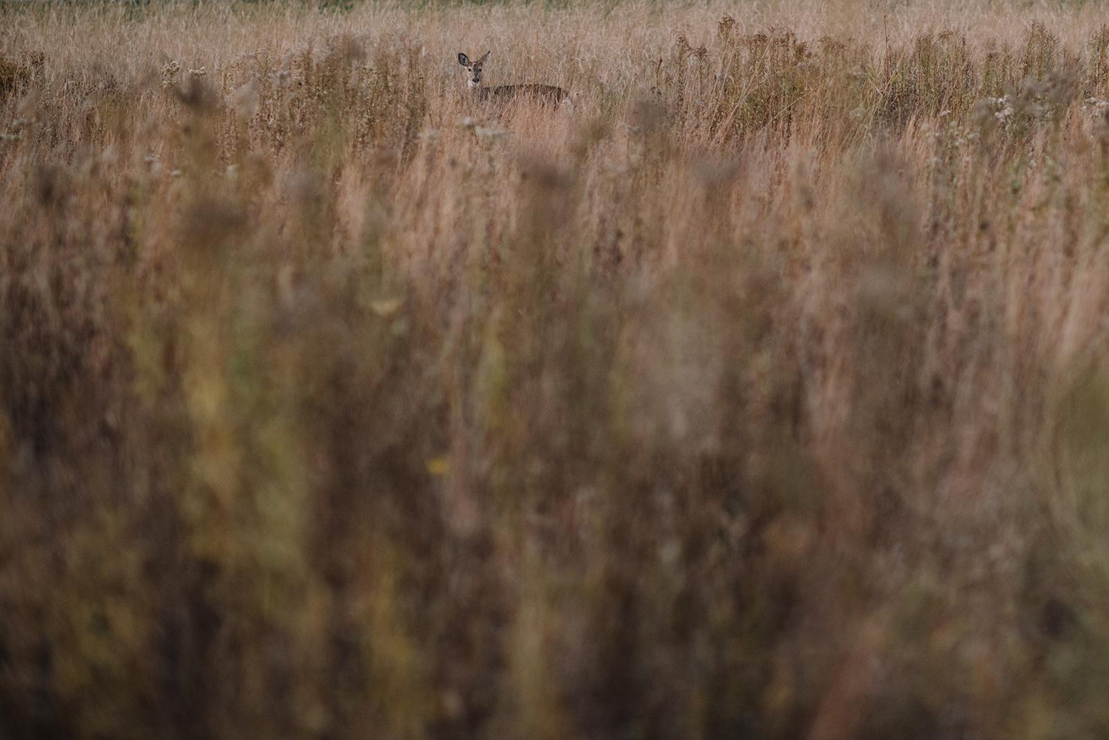 Prairie-207.jpg