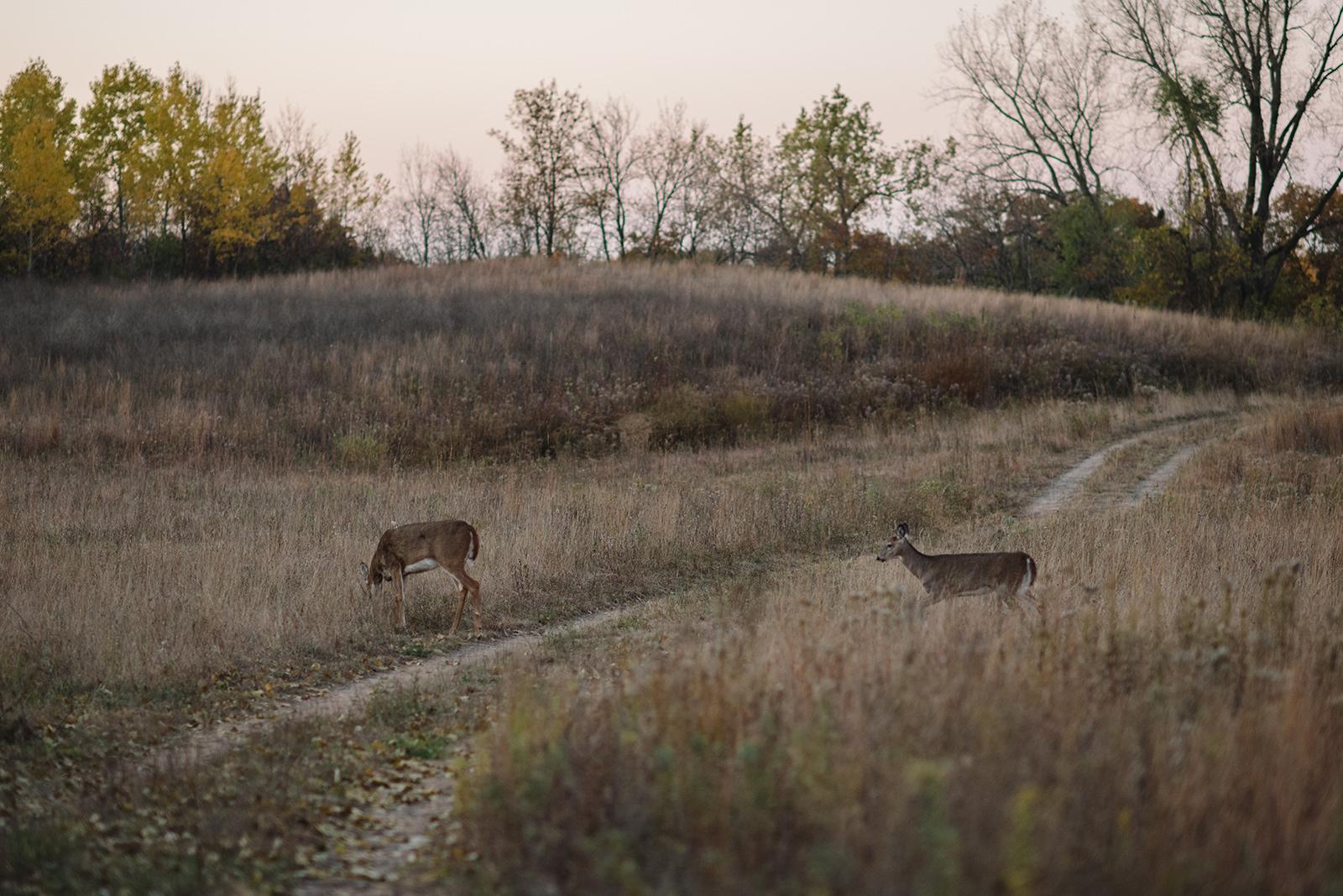 Prairie-231.jpg