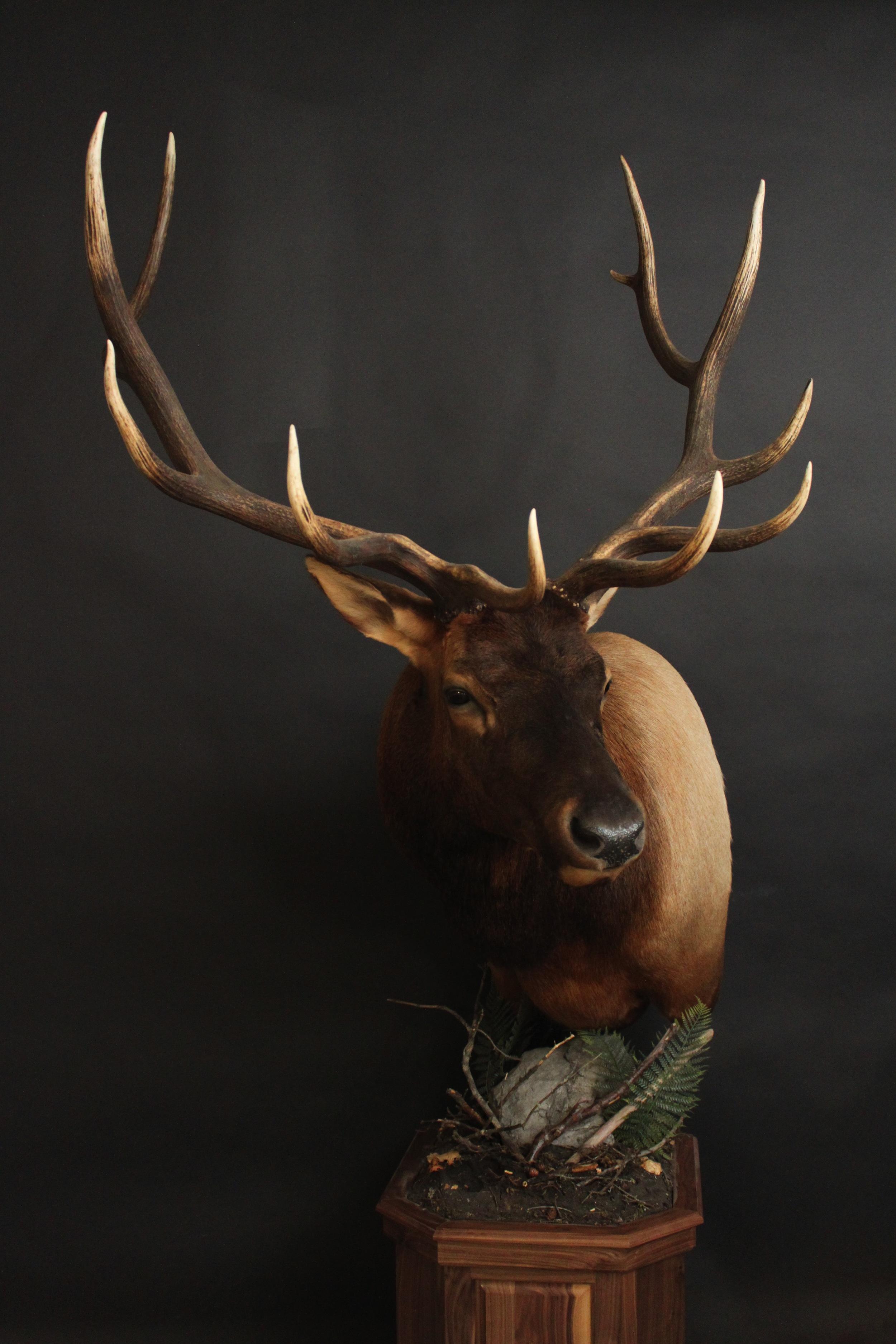 Elk 008