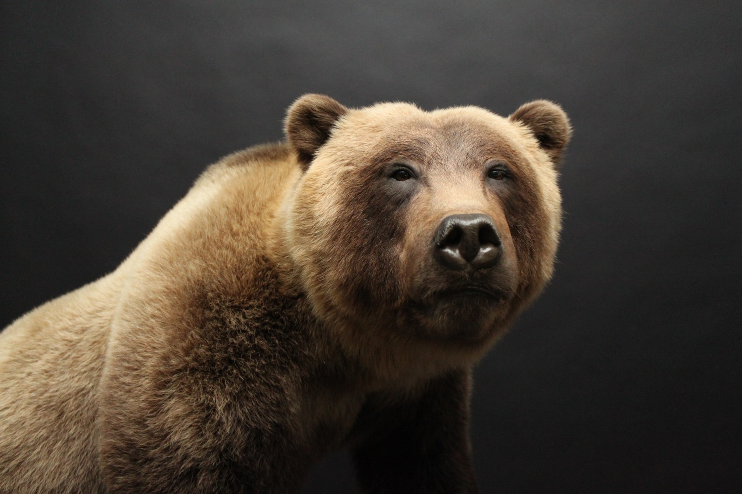 Grizzly3-1