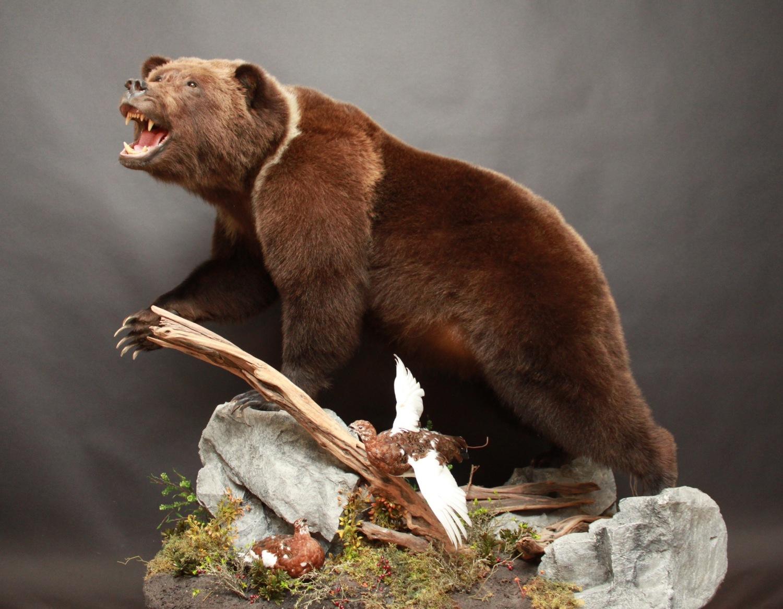 Lifesize, open mouth  Black Bear (12)
