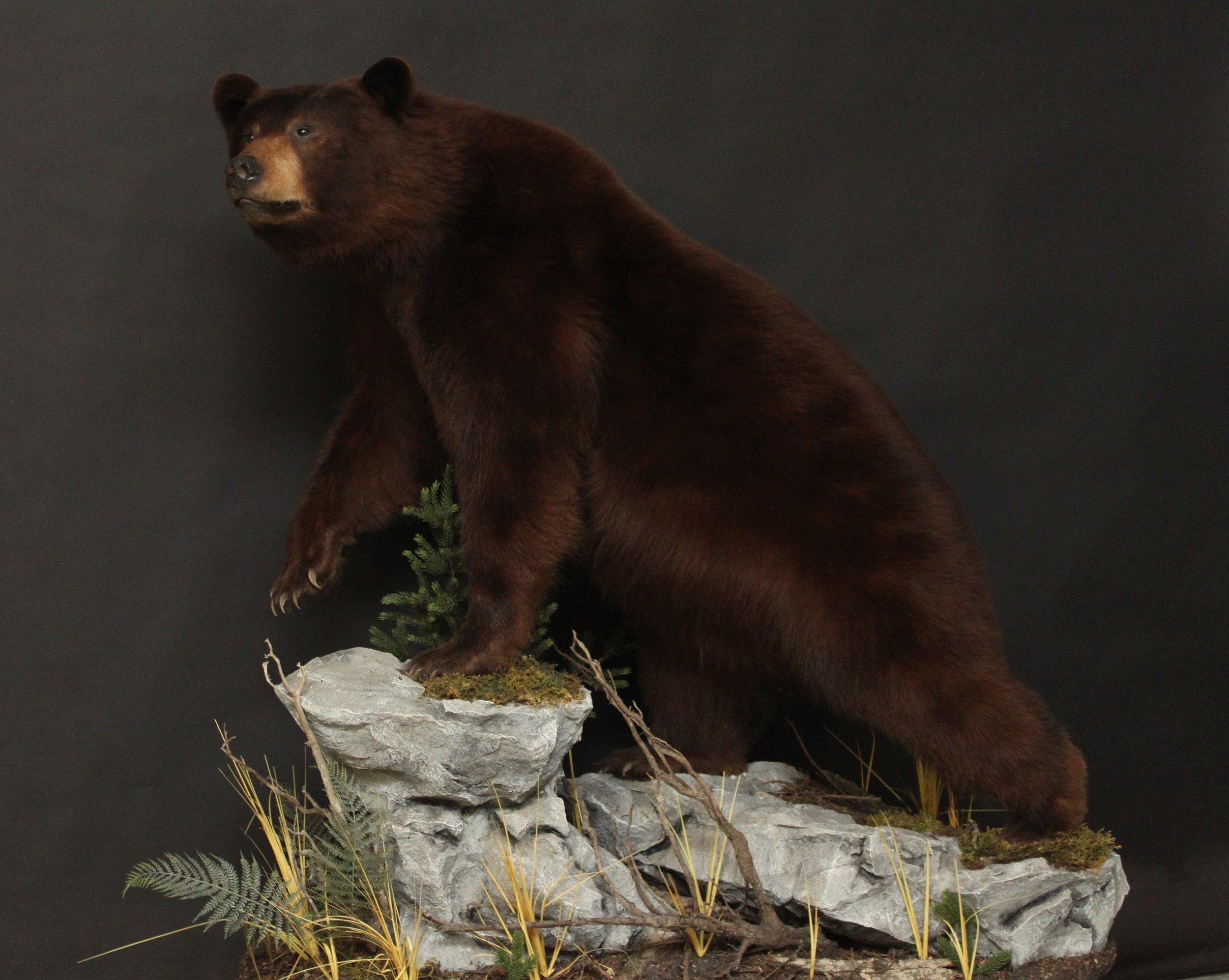 Lifesize  Black Bear (5)