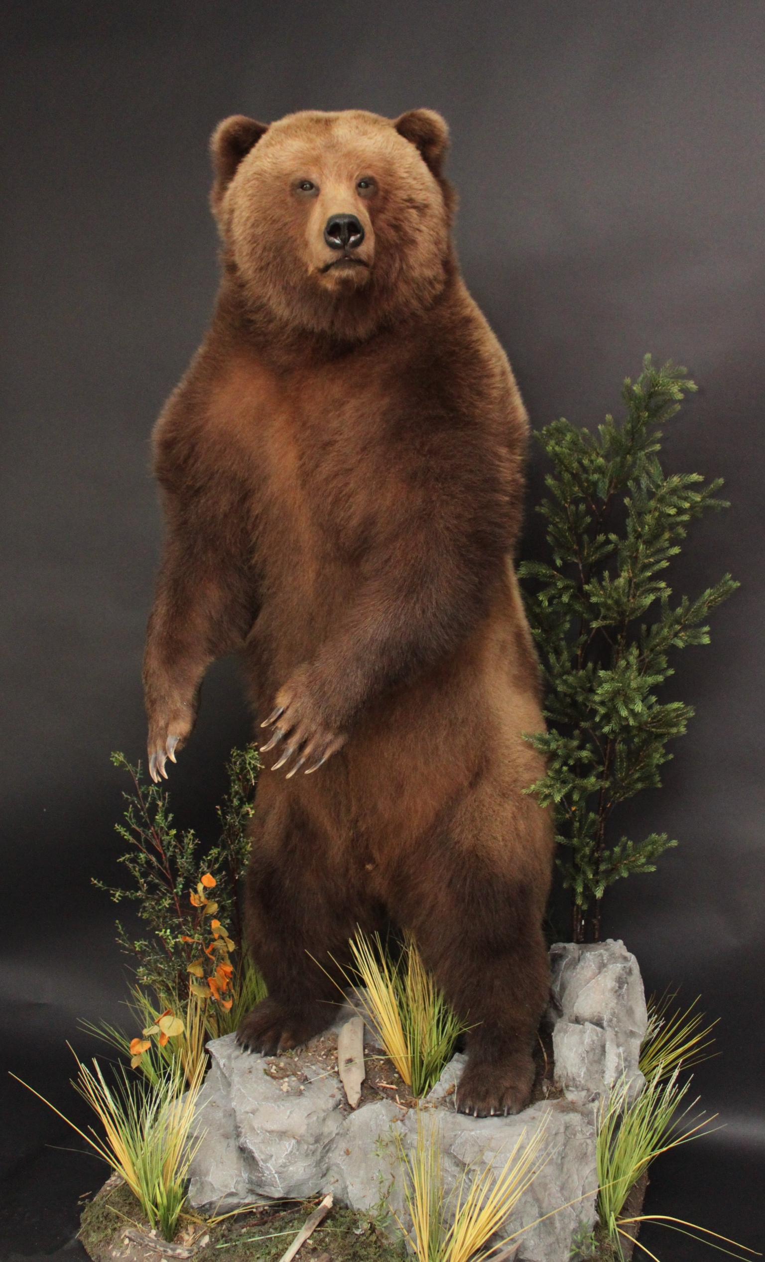 Lifesize  Grizzly (4)