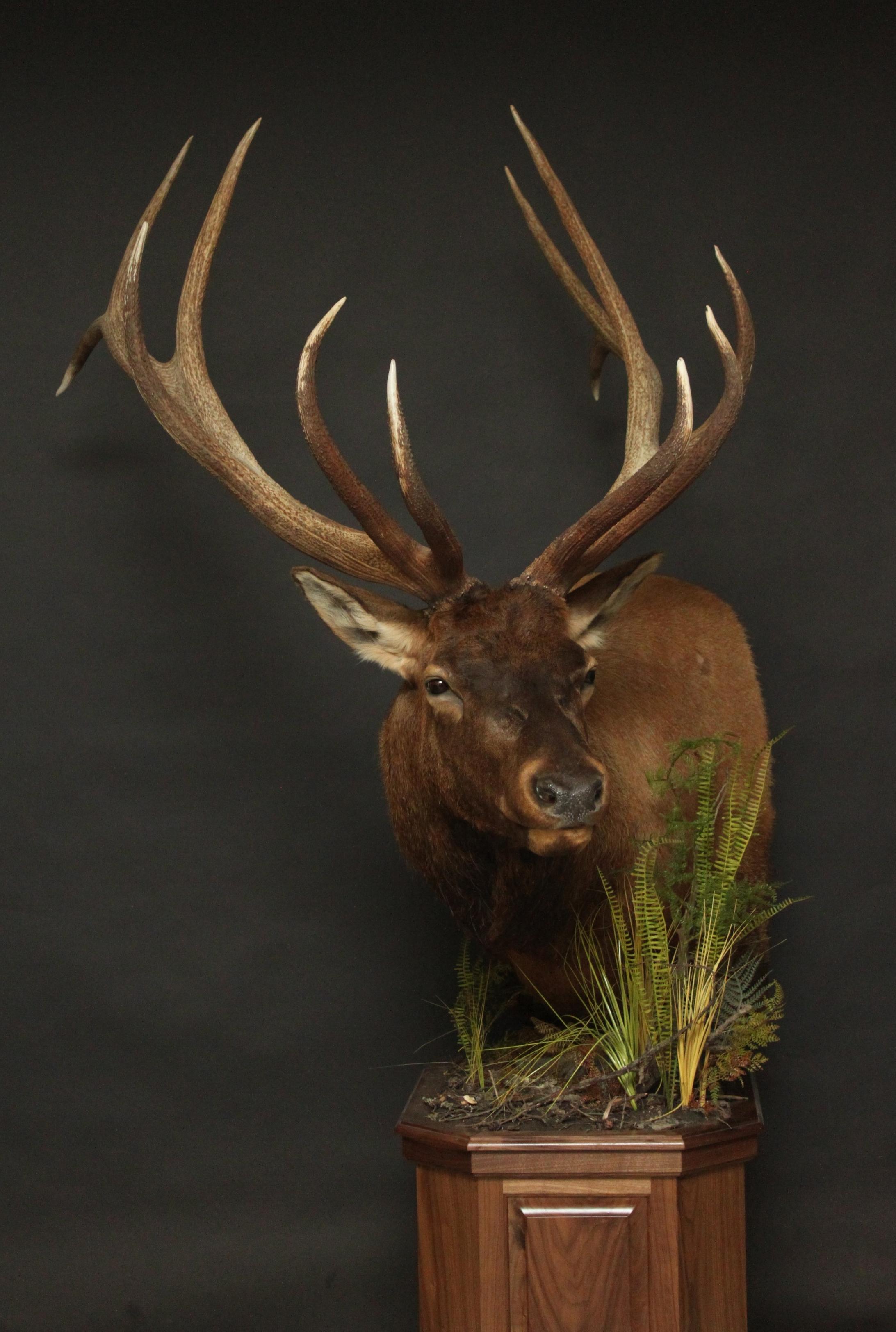 Elk 022