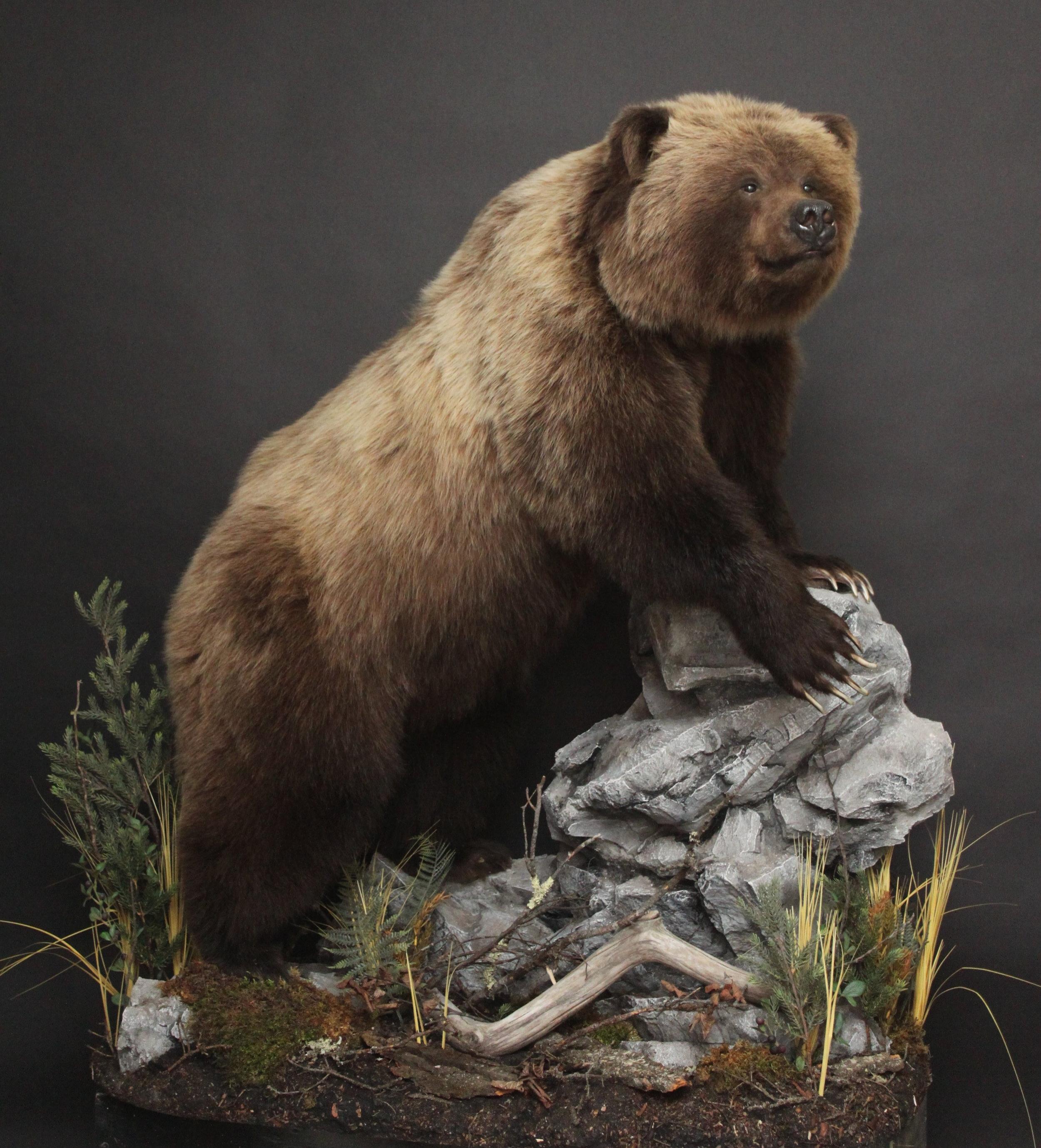 Lifesize  Grizzly (2)