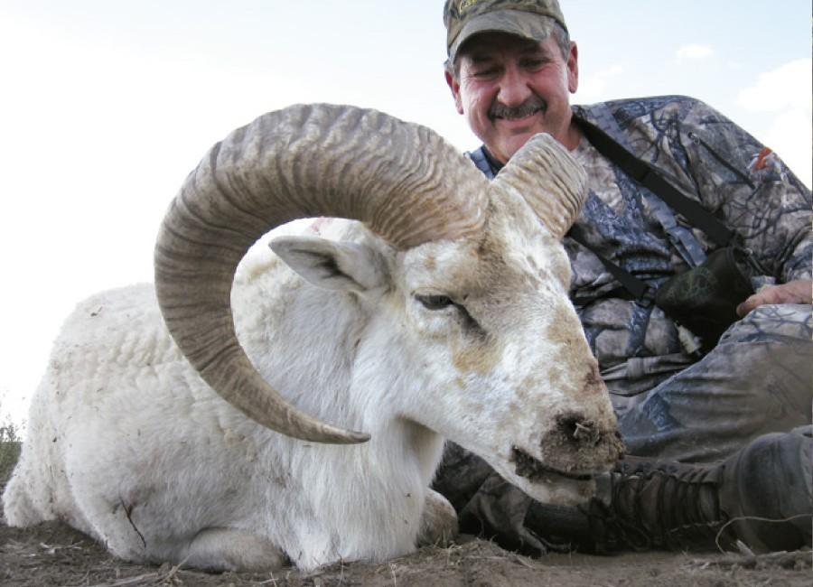 12-Texas-Dall-Sheep-900x650.jpg
