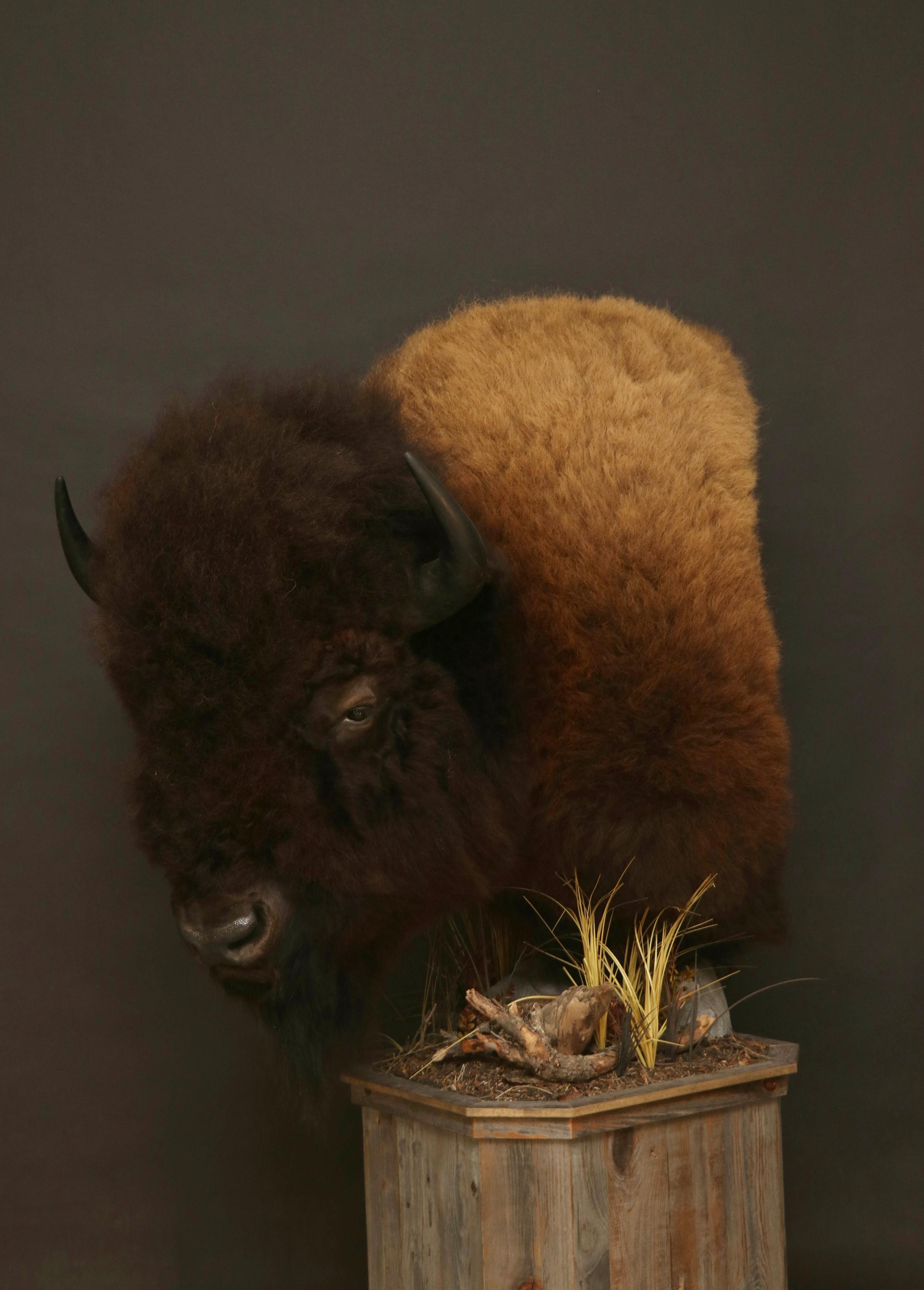 Barnboard Pedestal  Buffalo (1)