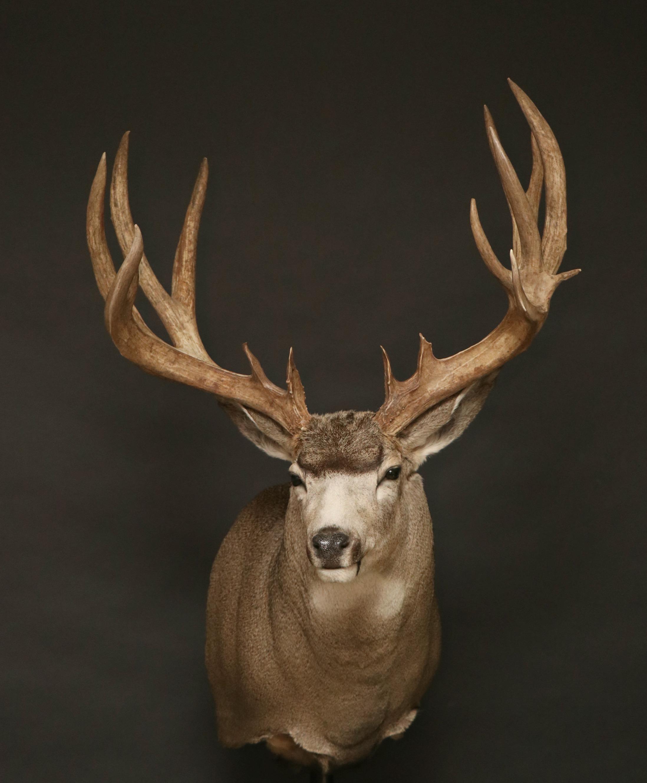 Mule (29)
