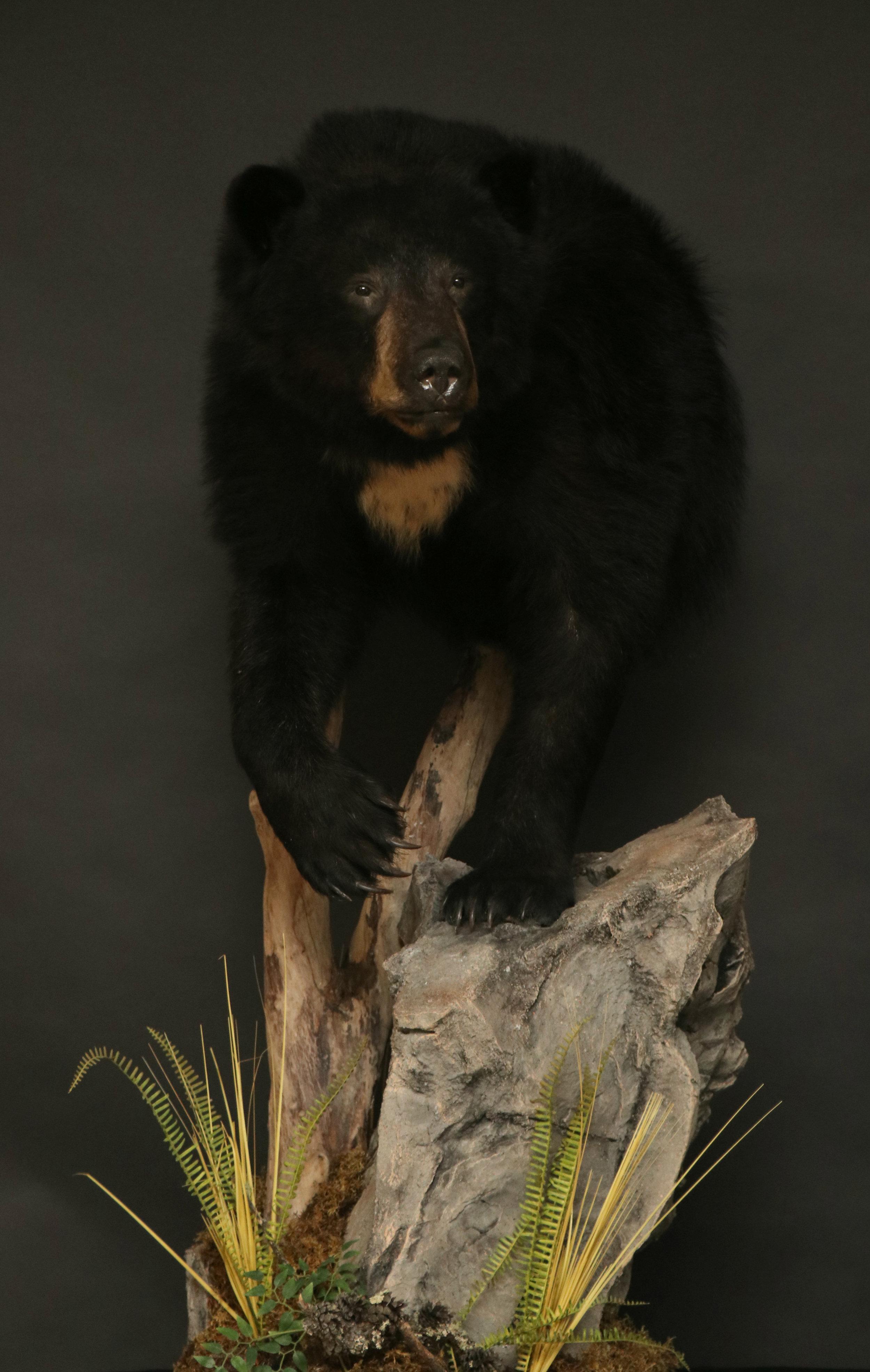 1/2 Body  Back Bear (6)