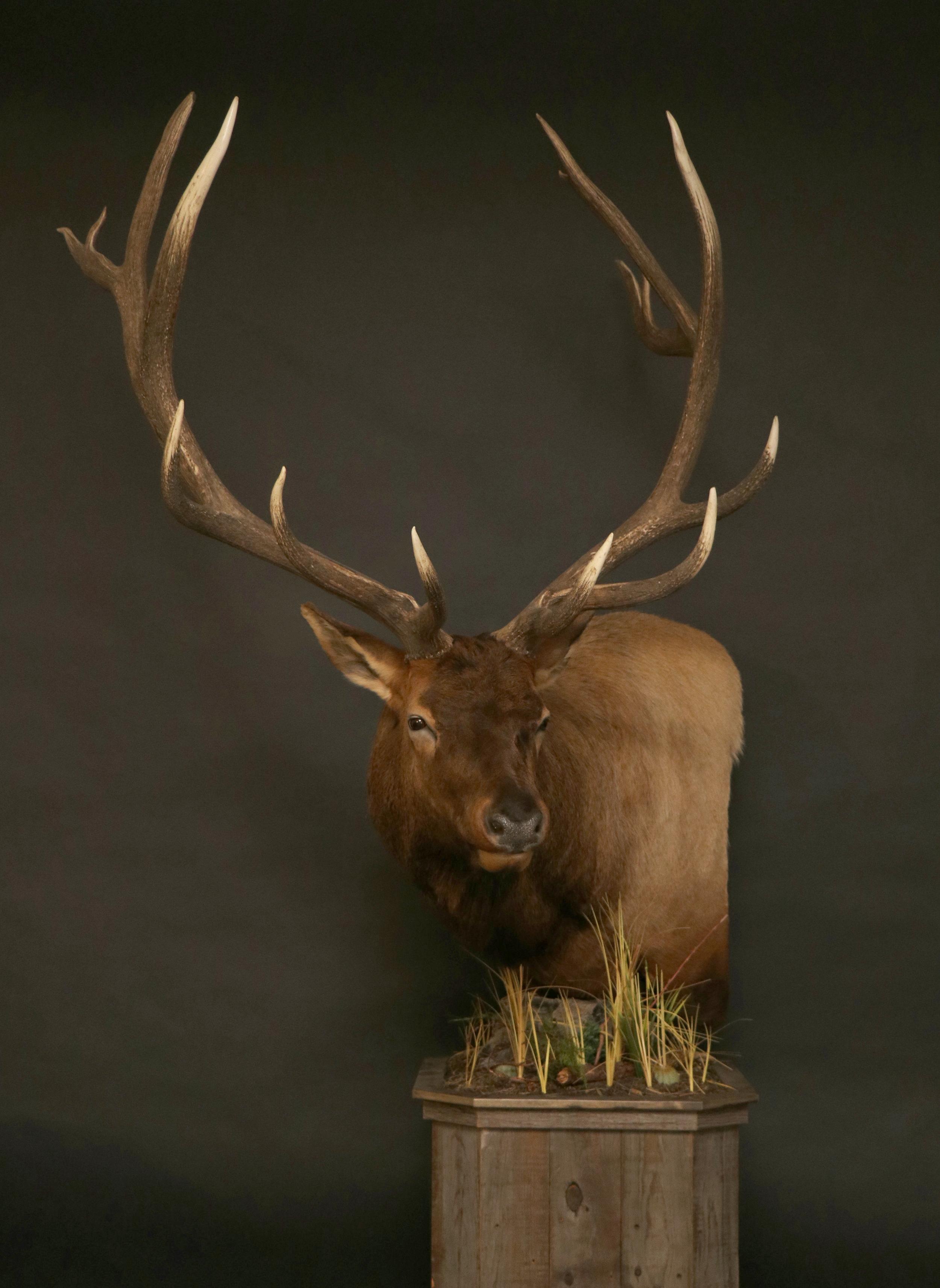 Elk Pedestal 20