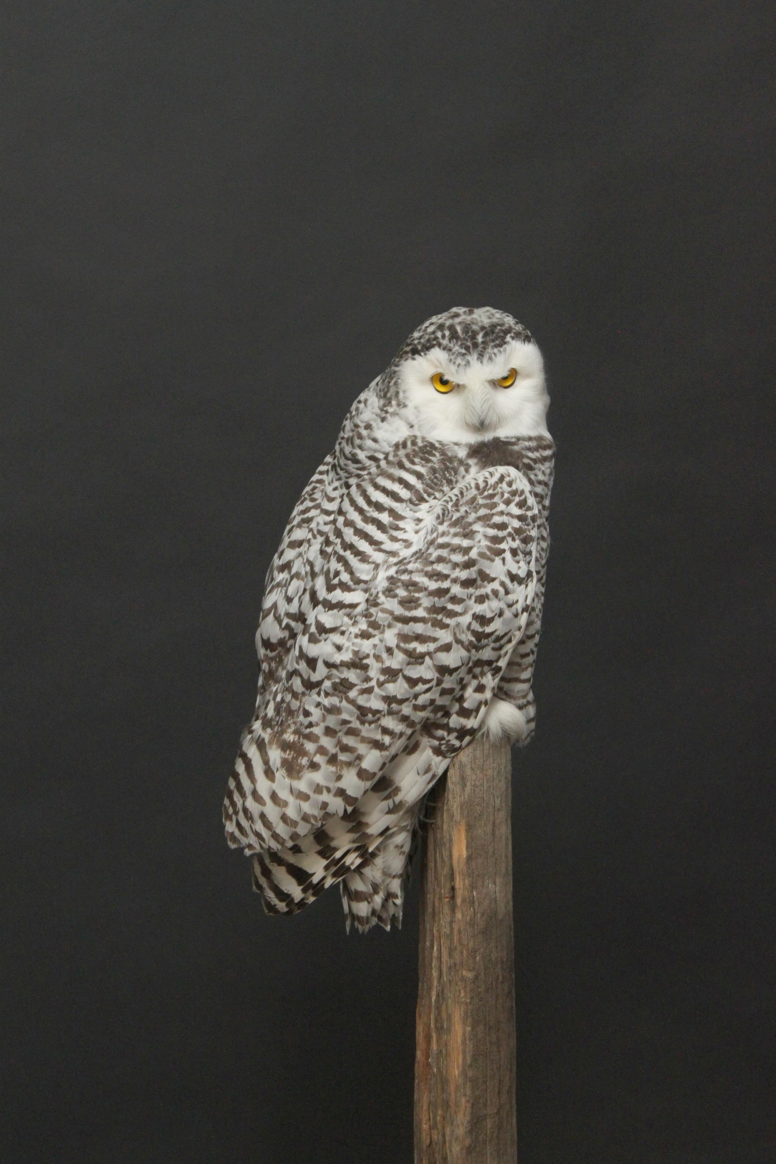 Owl (5).JPG