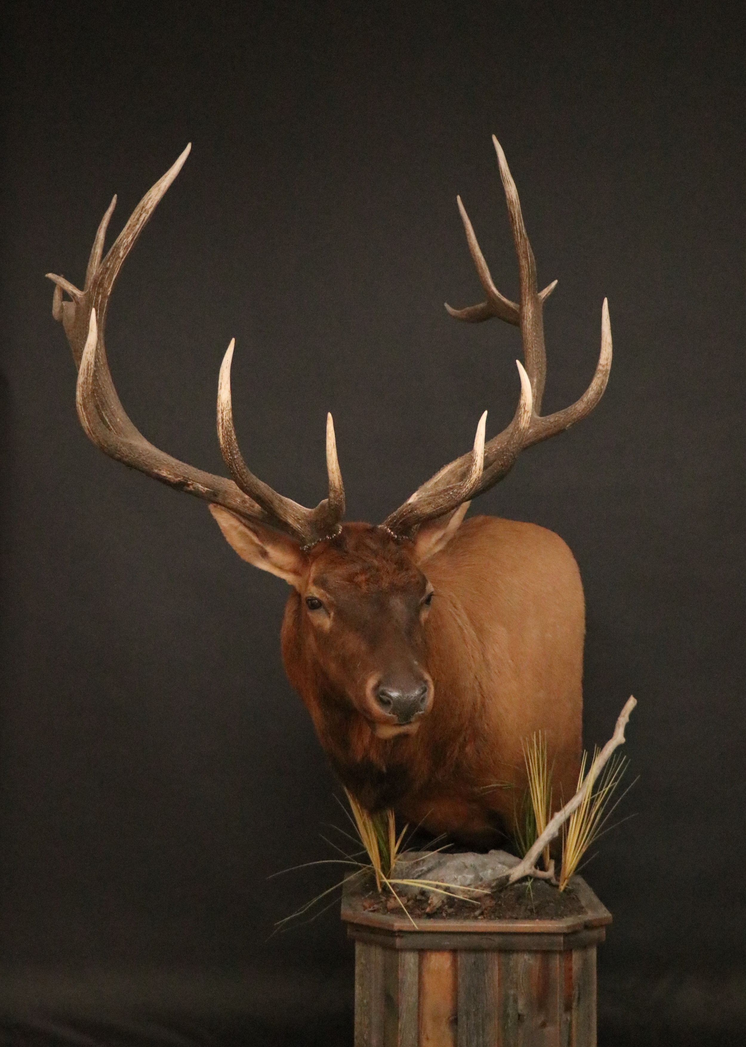 Elk 018