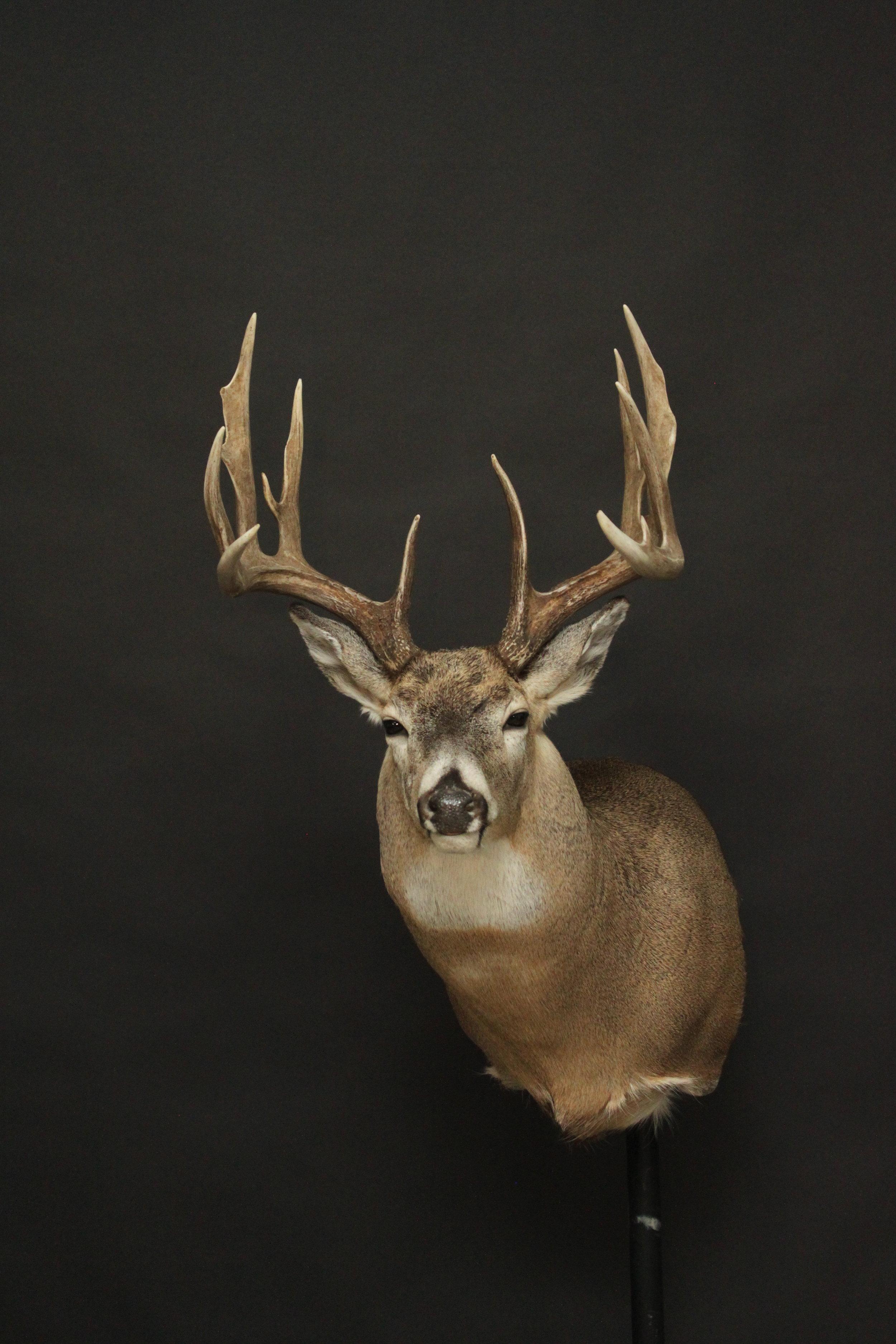 Whitetail (35).JPG