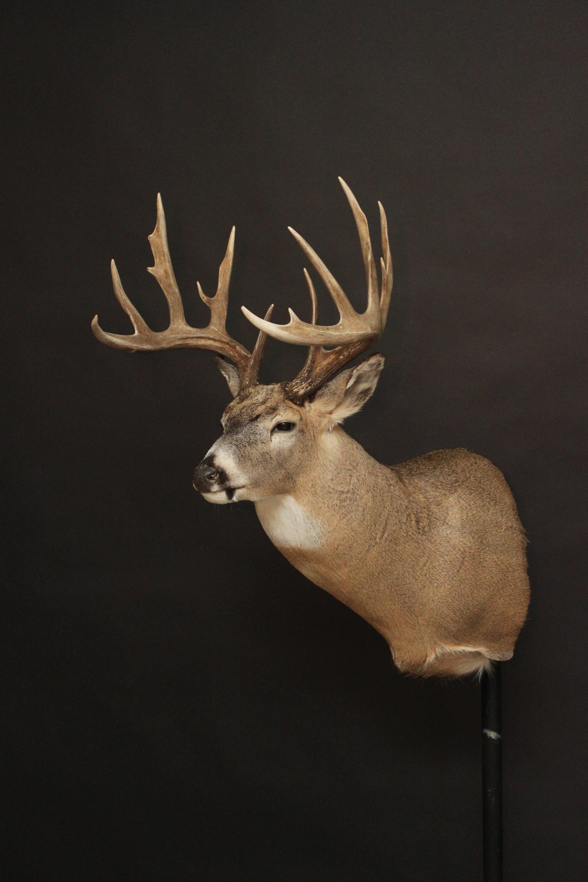 Whitetail (36).JPG