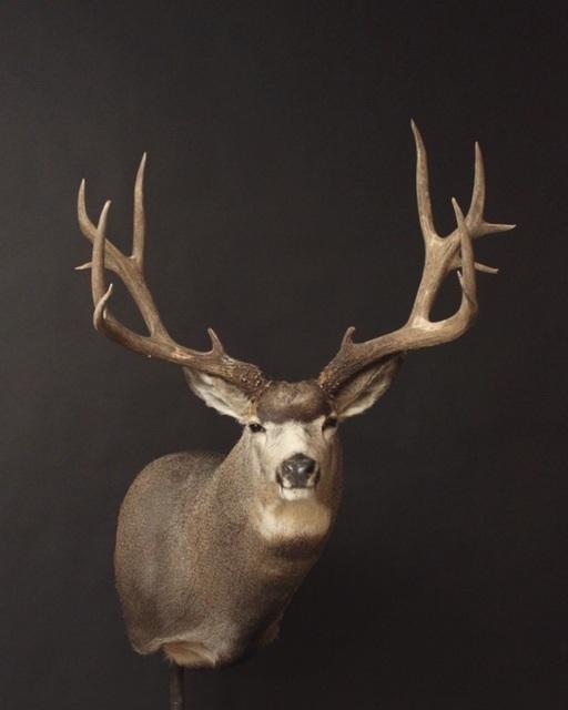 Mule (33)