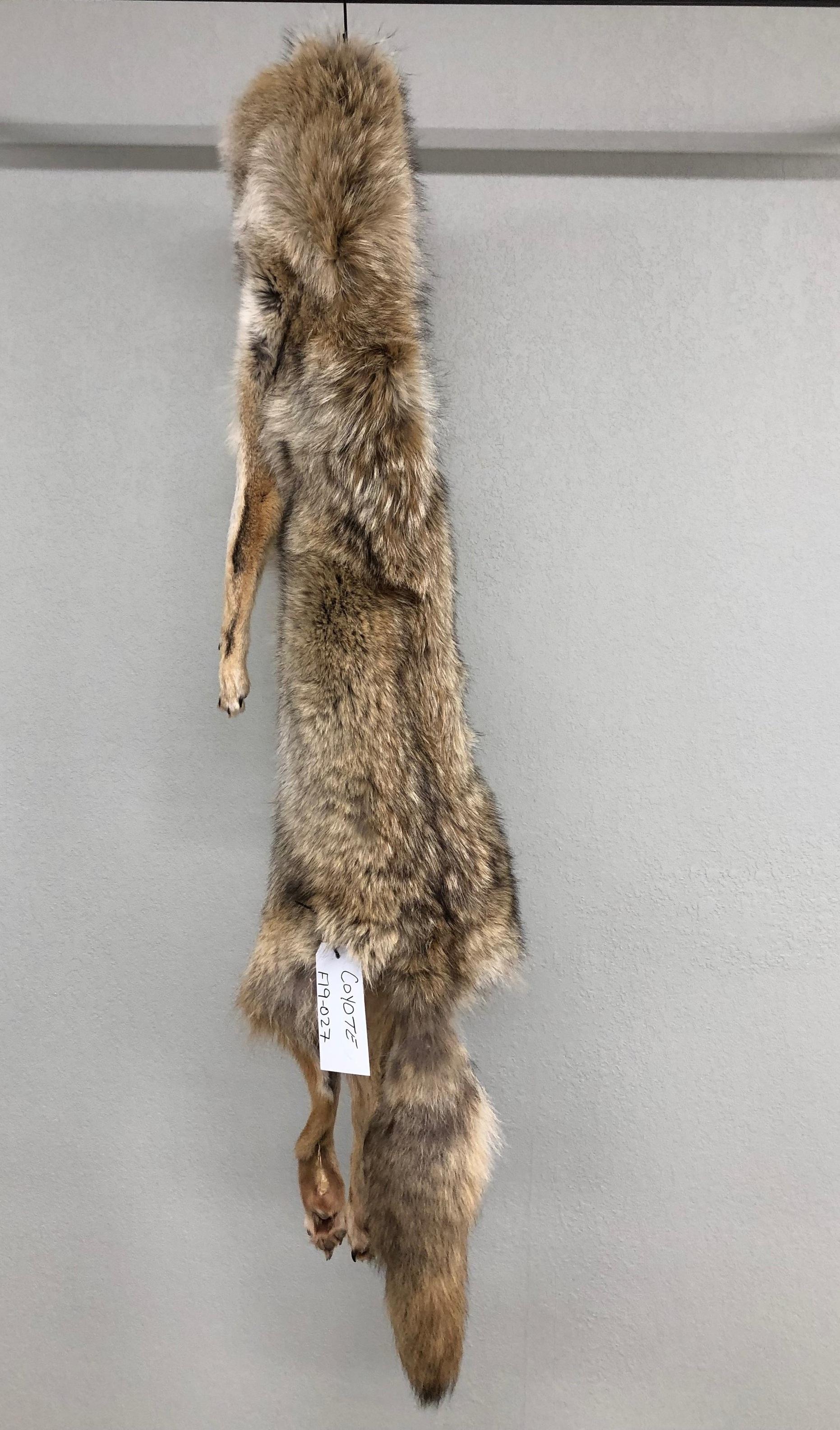 Coyote Tube Tan