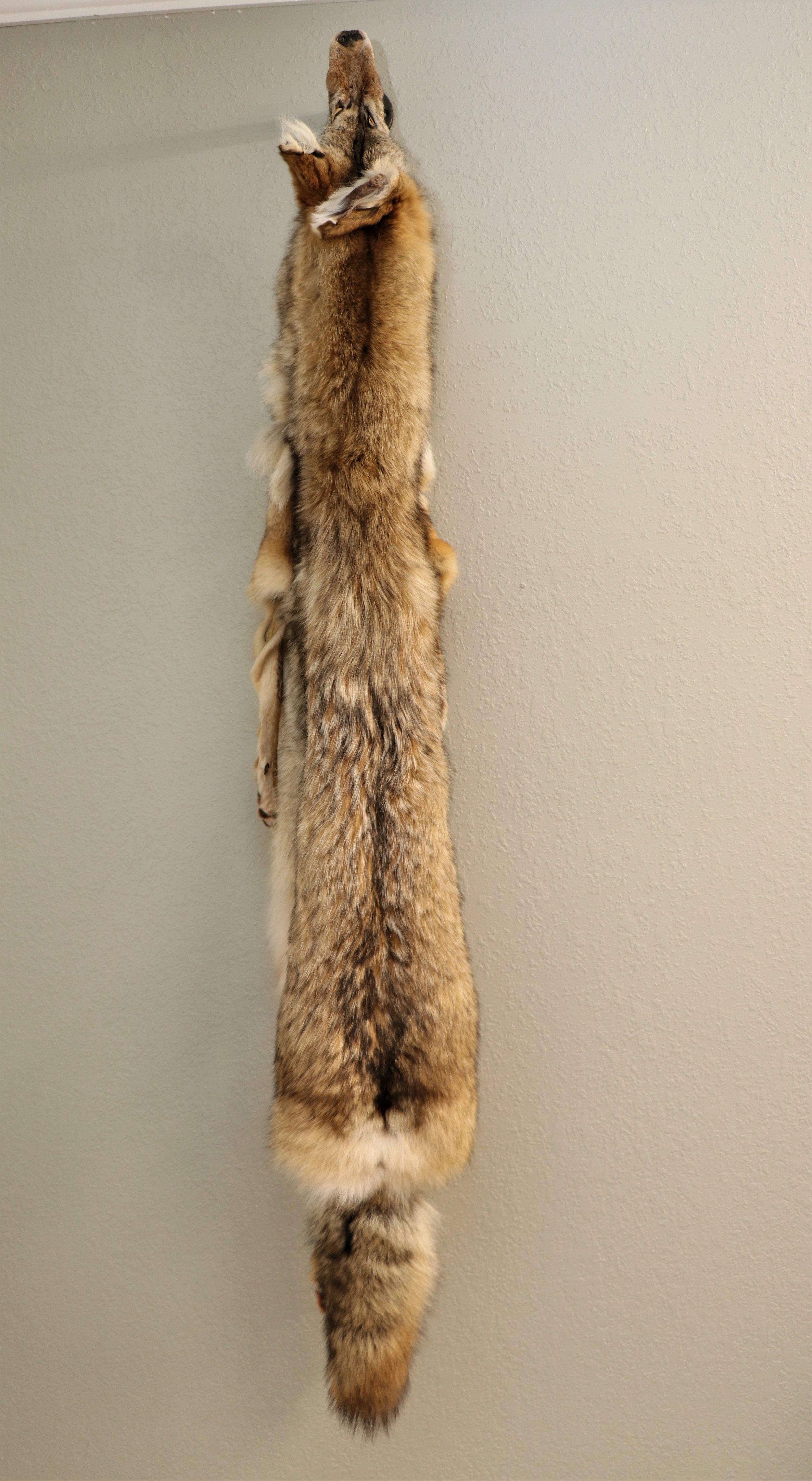 Coyote Tan