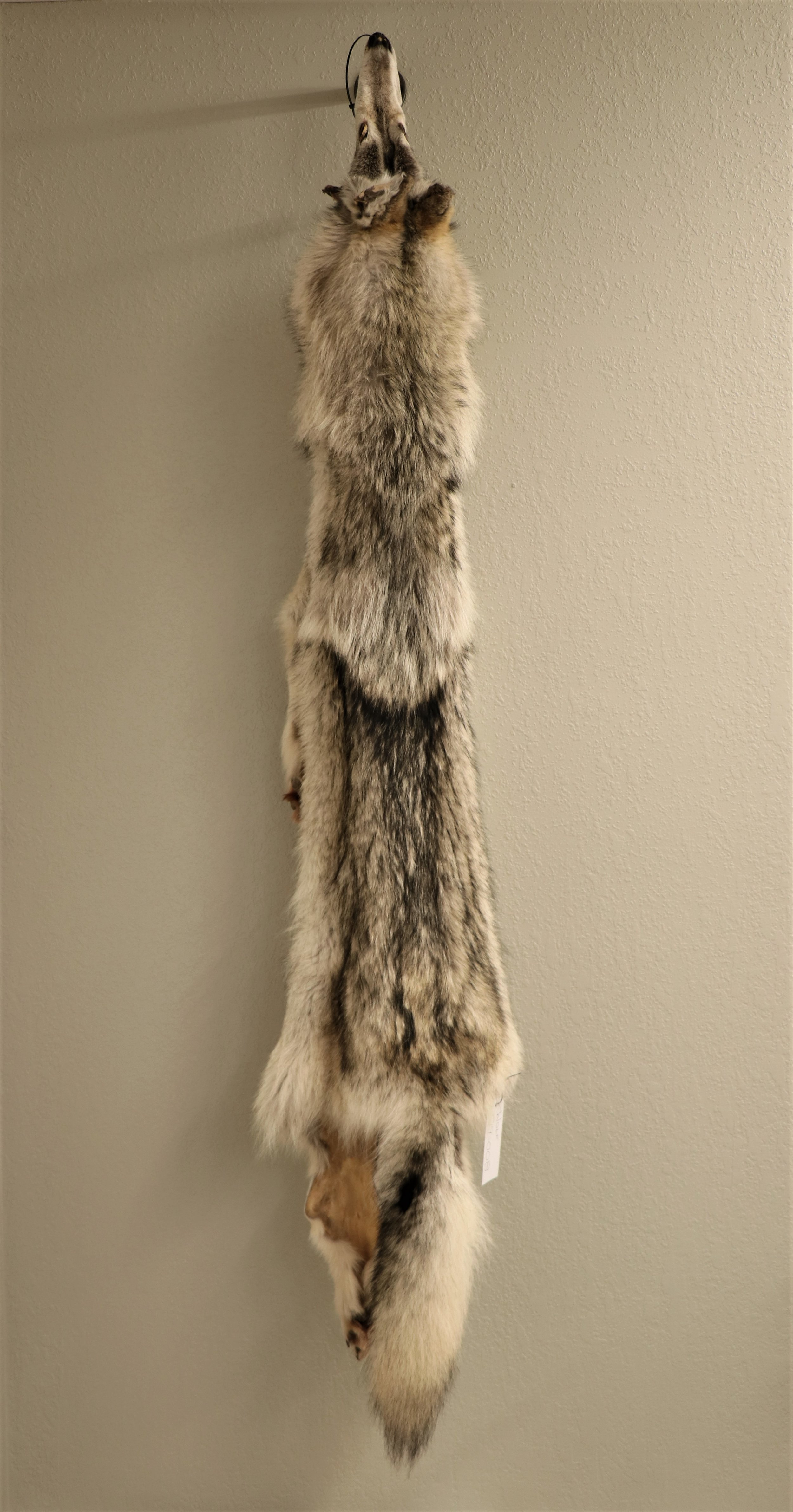 Wolf Soft Tan