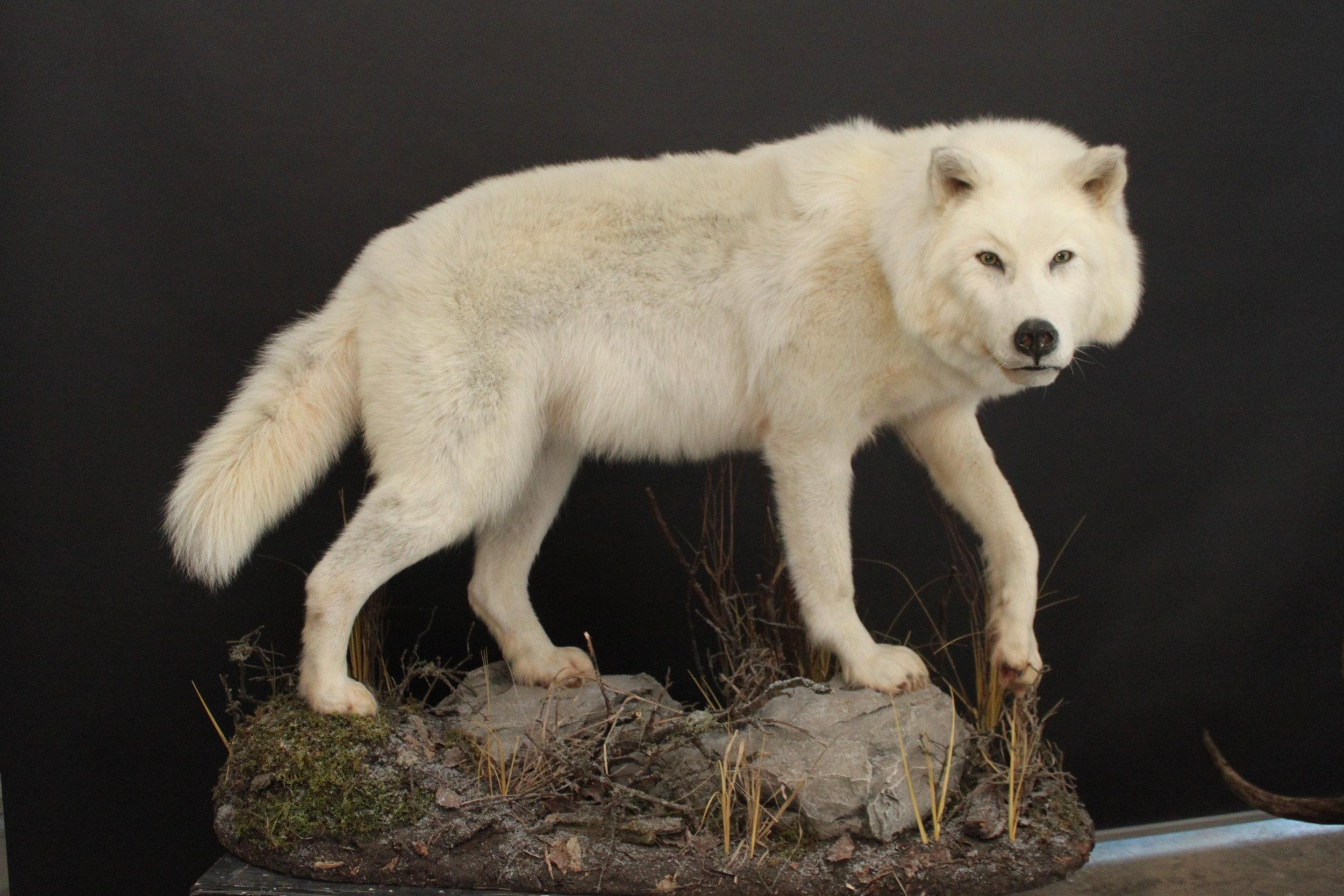 wolf (1).JPG