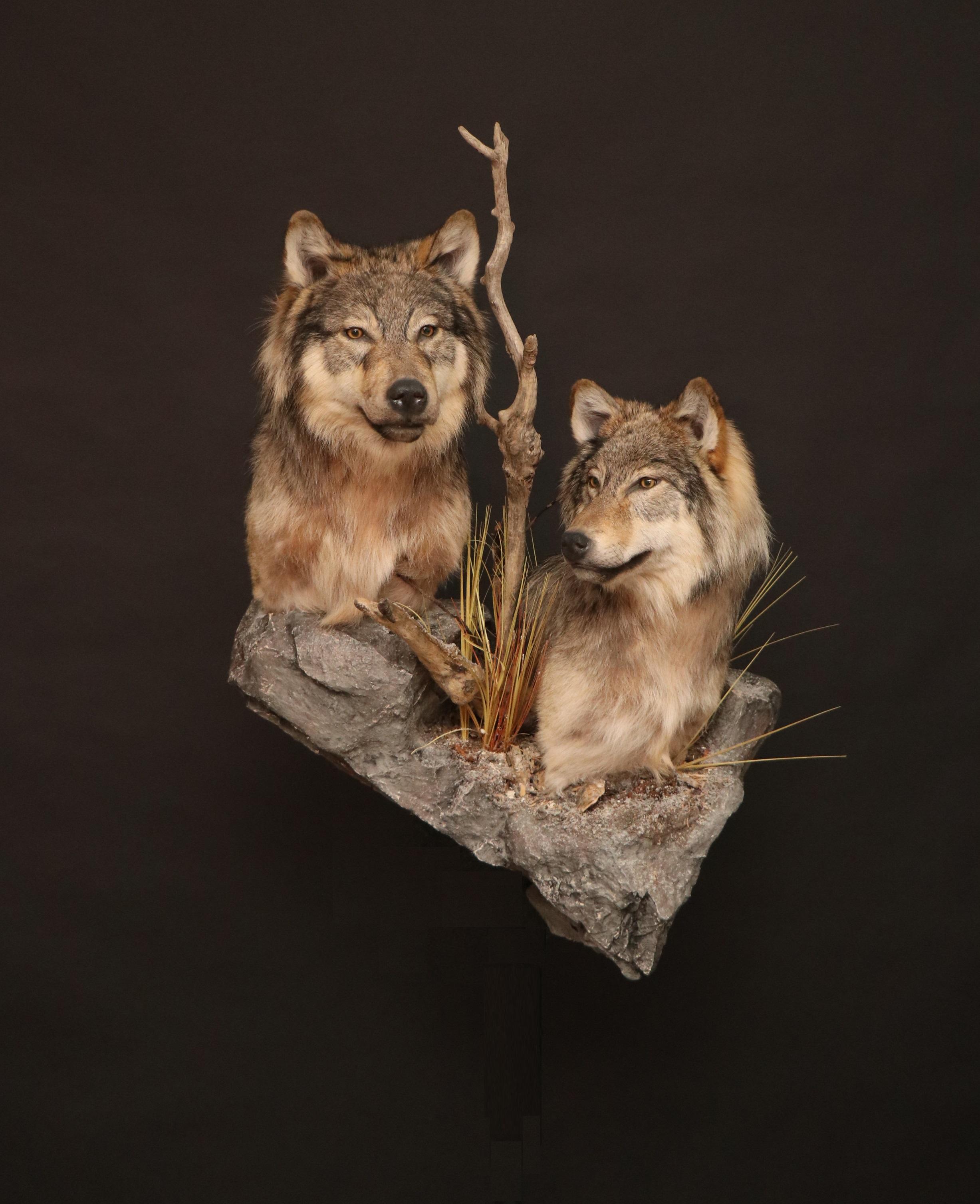Wolf (9).jpg