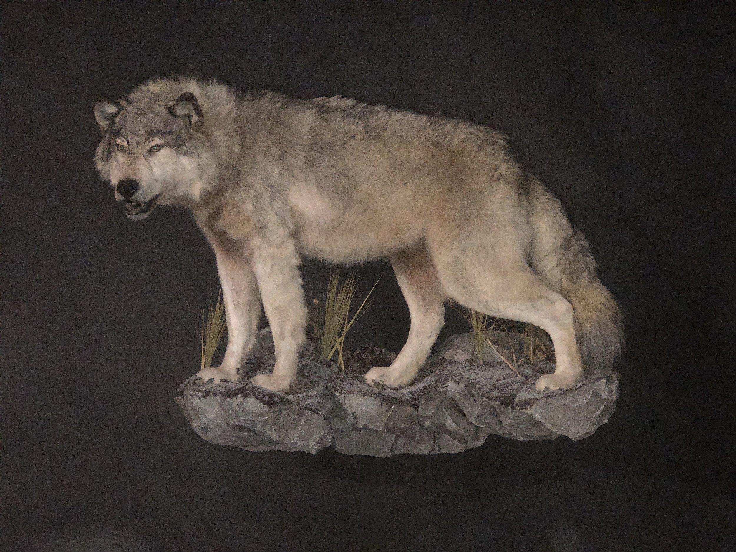 Wolf Lonroth.jpg