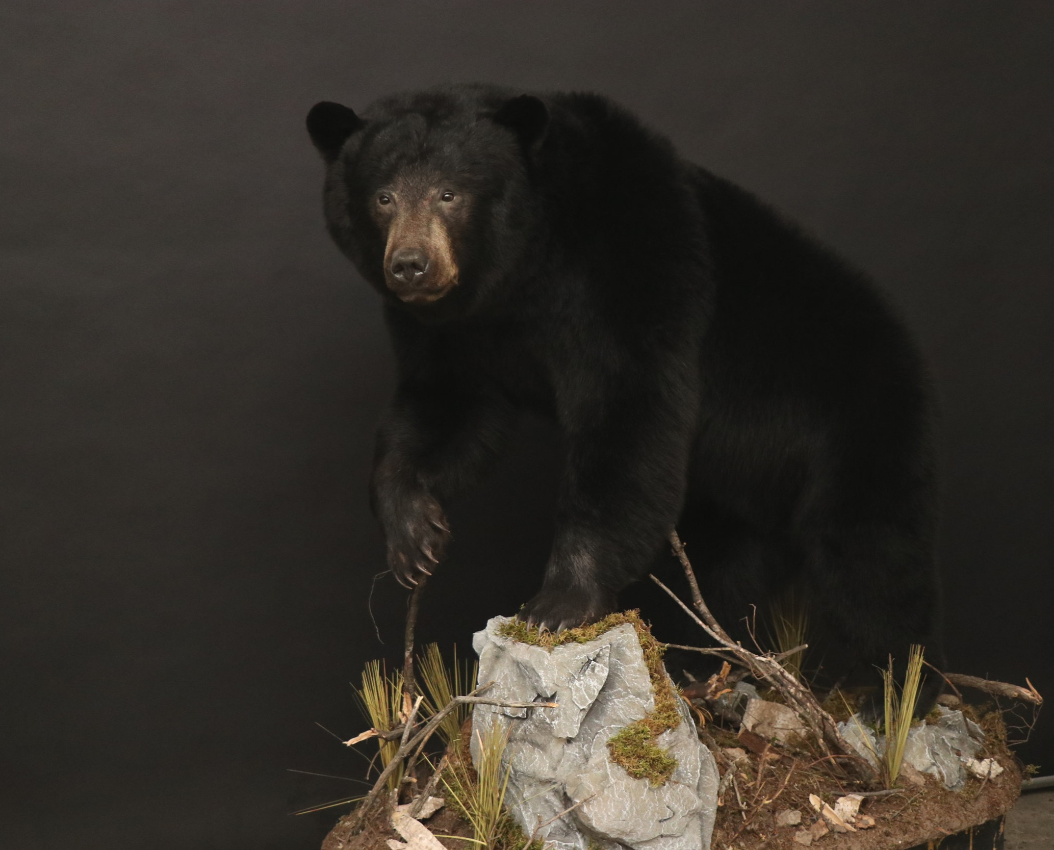 Life size Bear 36