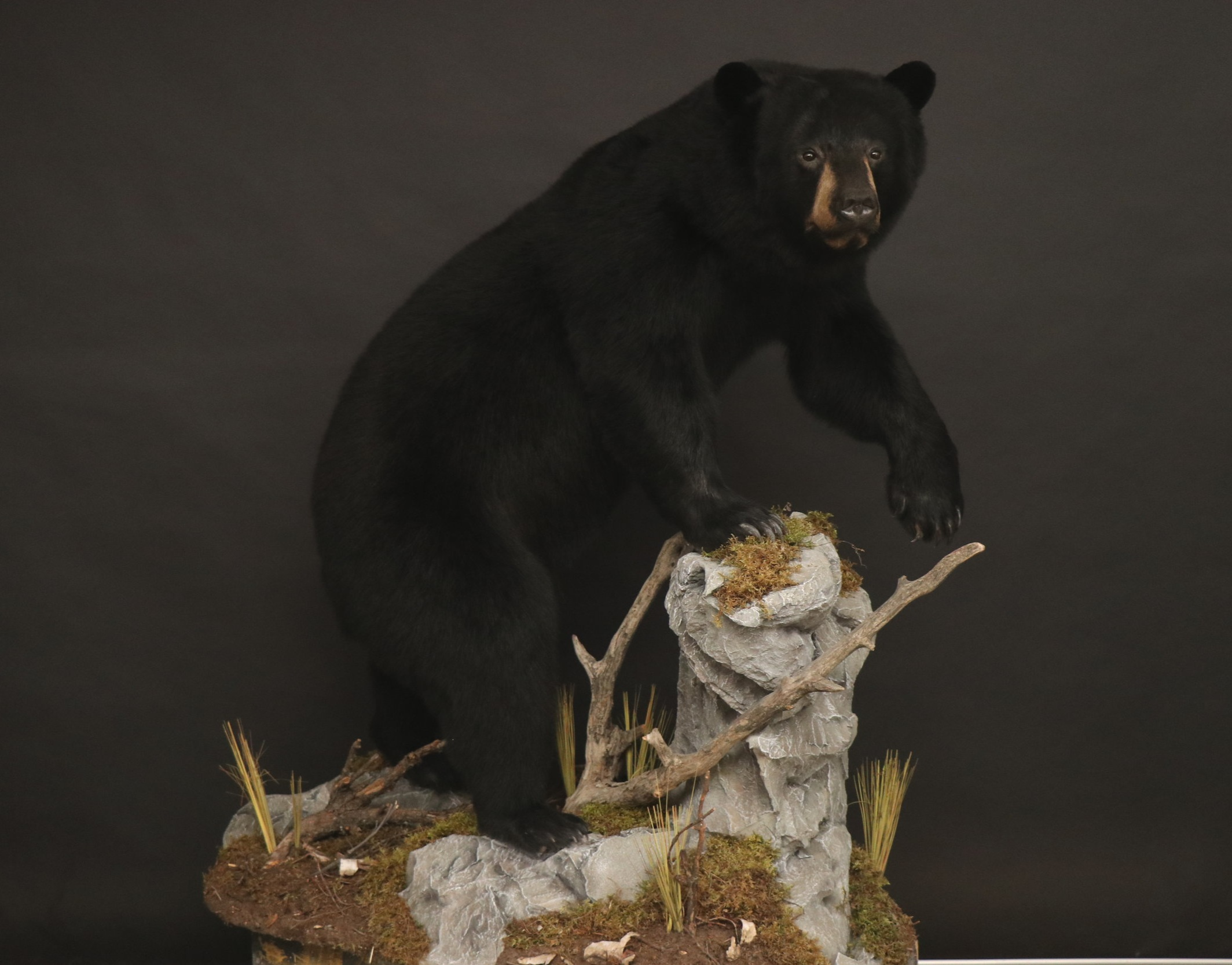 Life size Bear 35