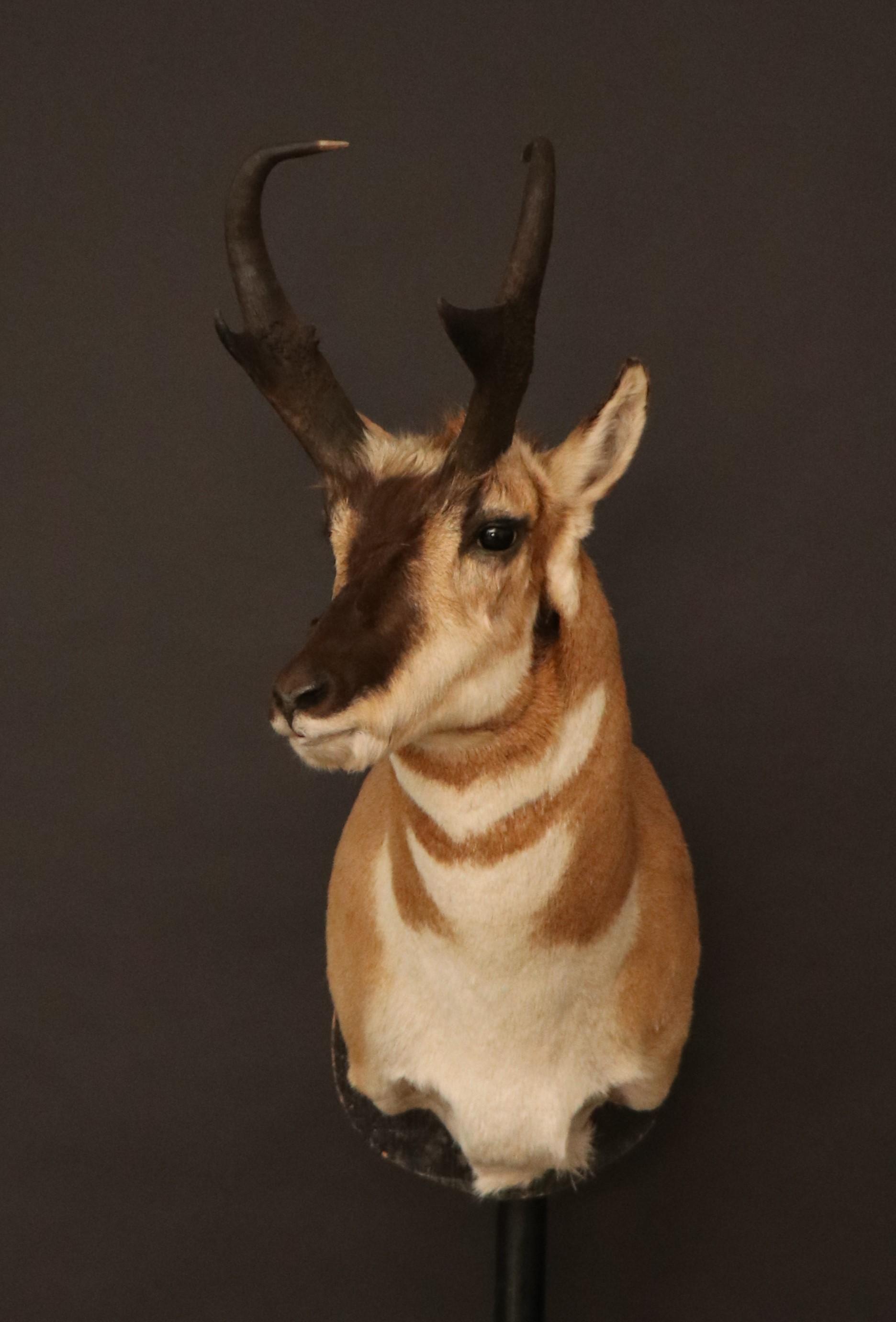 Antelope 8 (8).jpg
