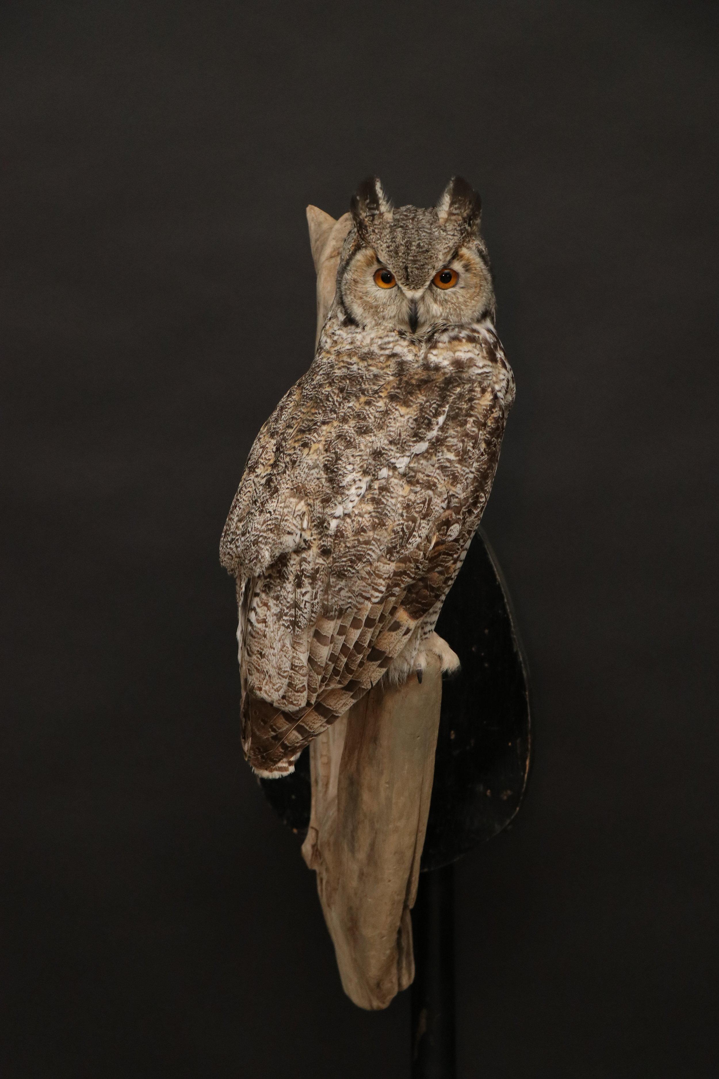 Owl 20