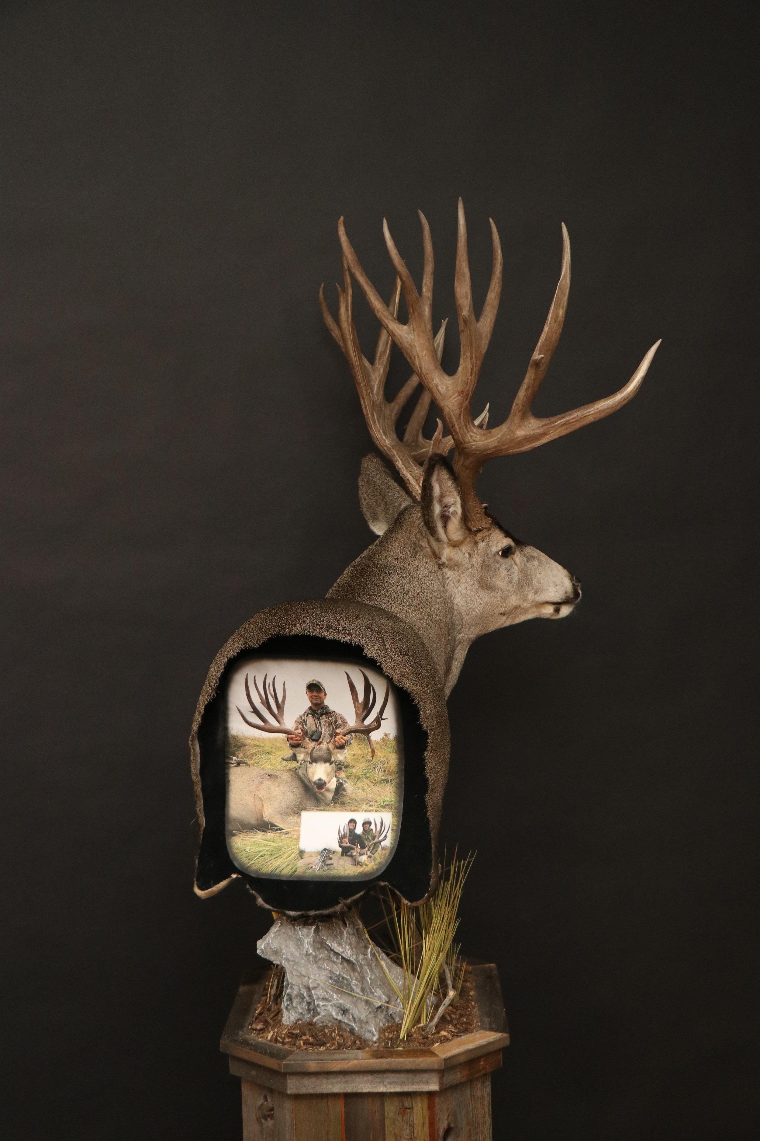 Back  Muledeer Pedestal 22