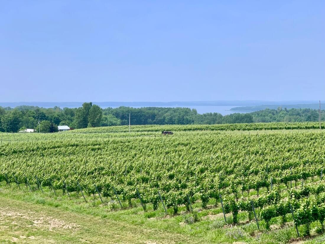 Bonobo Winery fields in Traverse City, Michigan