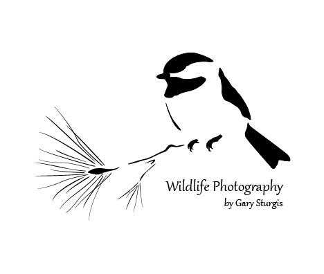 WildlifePhotography_logo_(c)ChameleonStudios.png