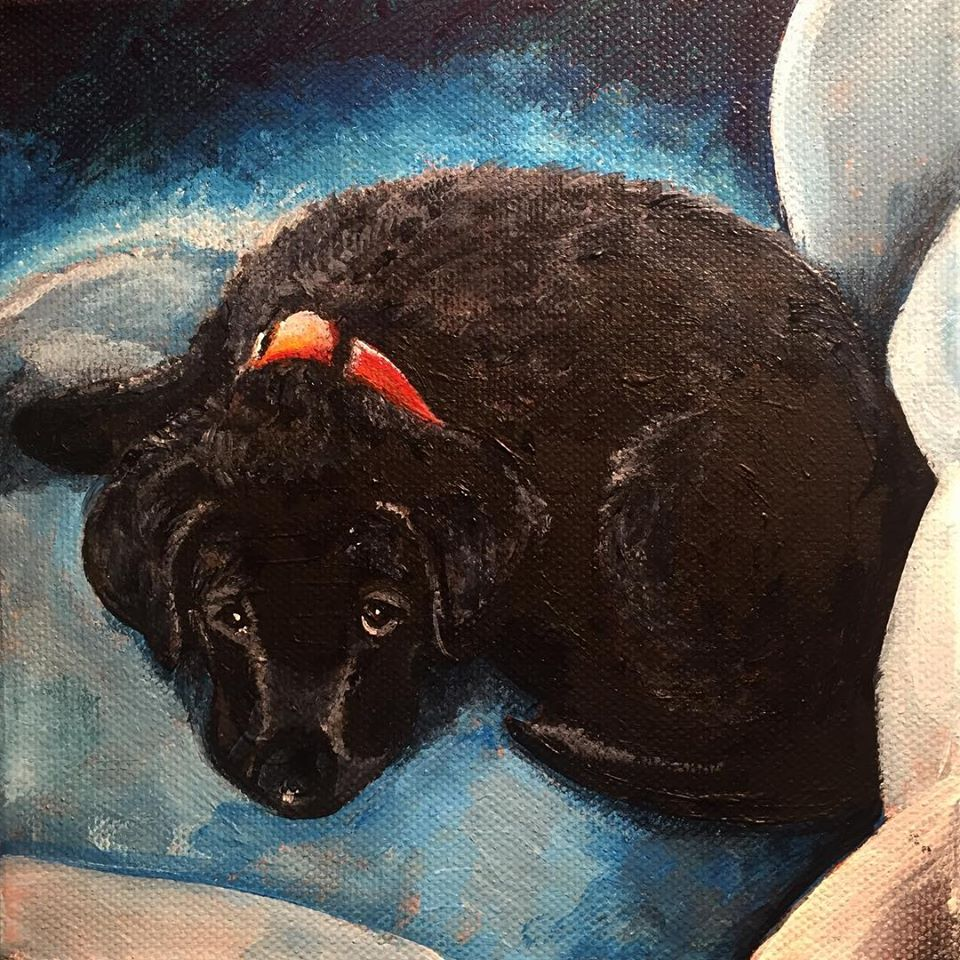 "Black Pup, 6"" x 6"" acrylic on canvas (2018)"