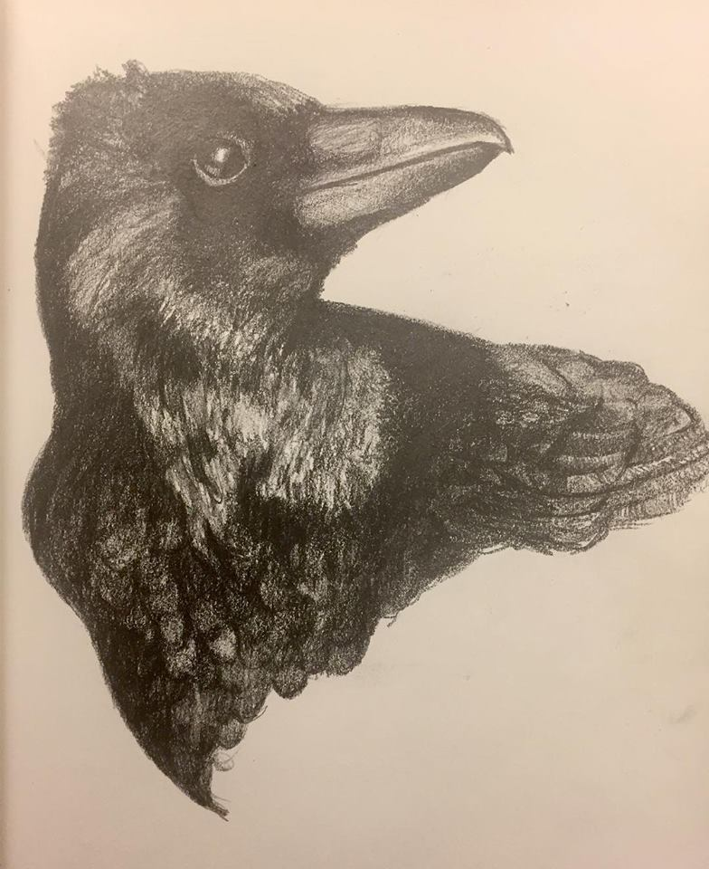 Crow, graphite on paper (2018)