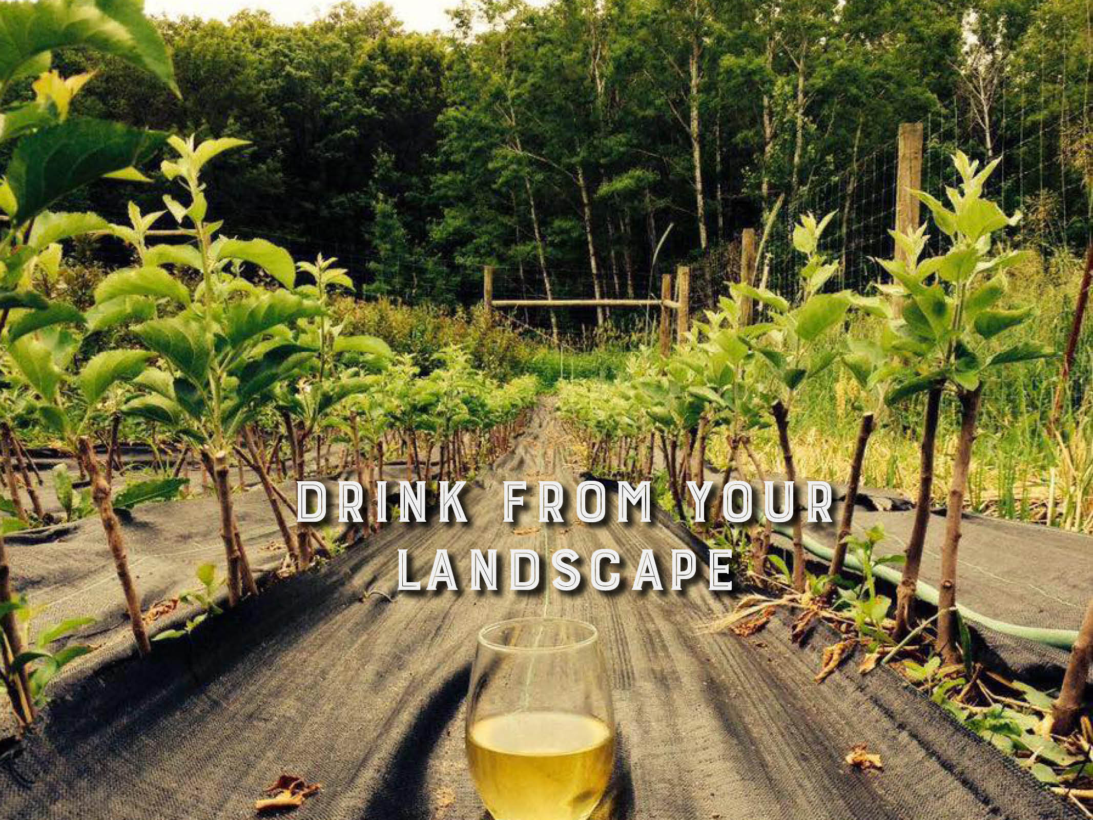 Drink from your landscape.jpg