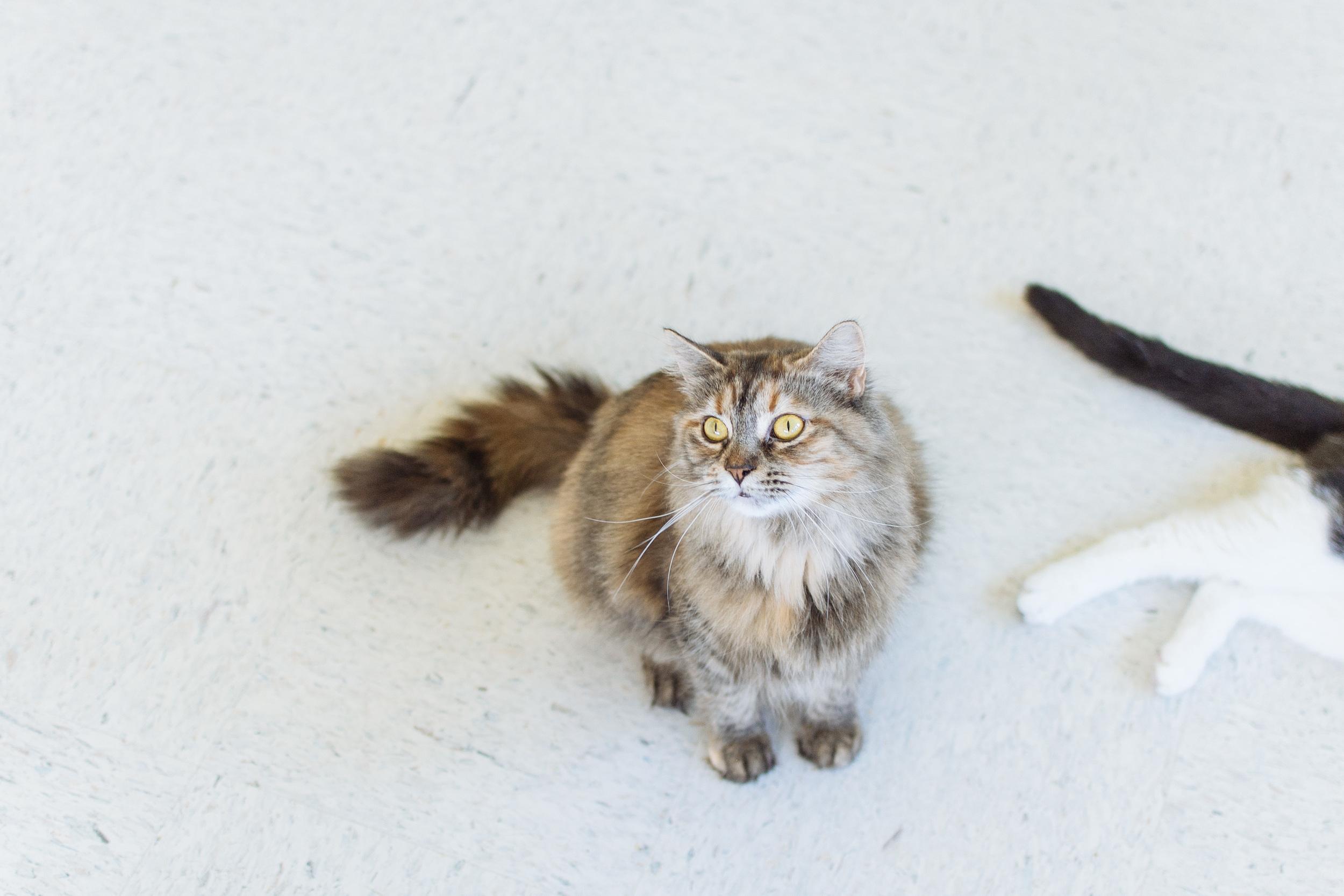 cats-15.jpg