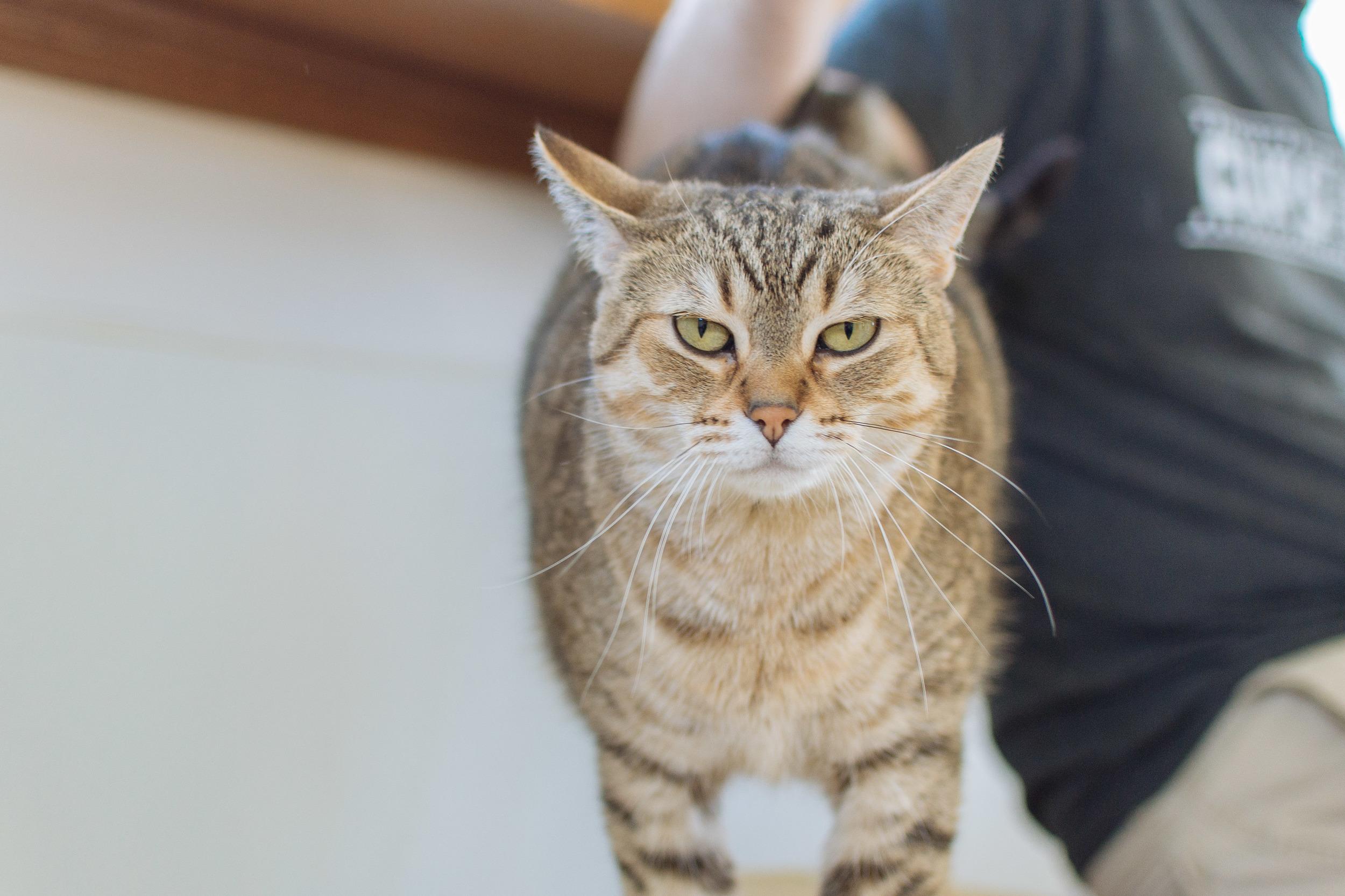 cats-17.jpg