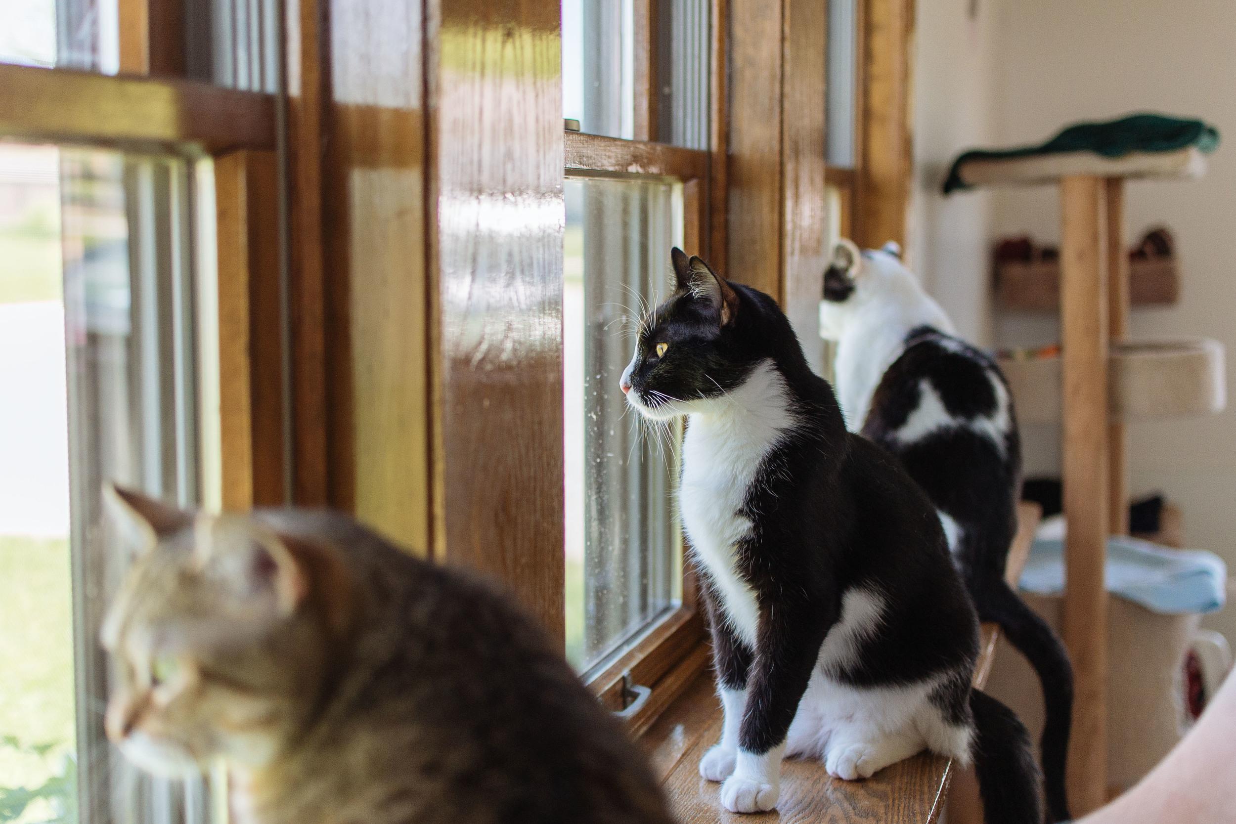 cats-19.jpg