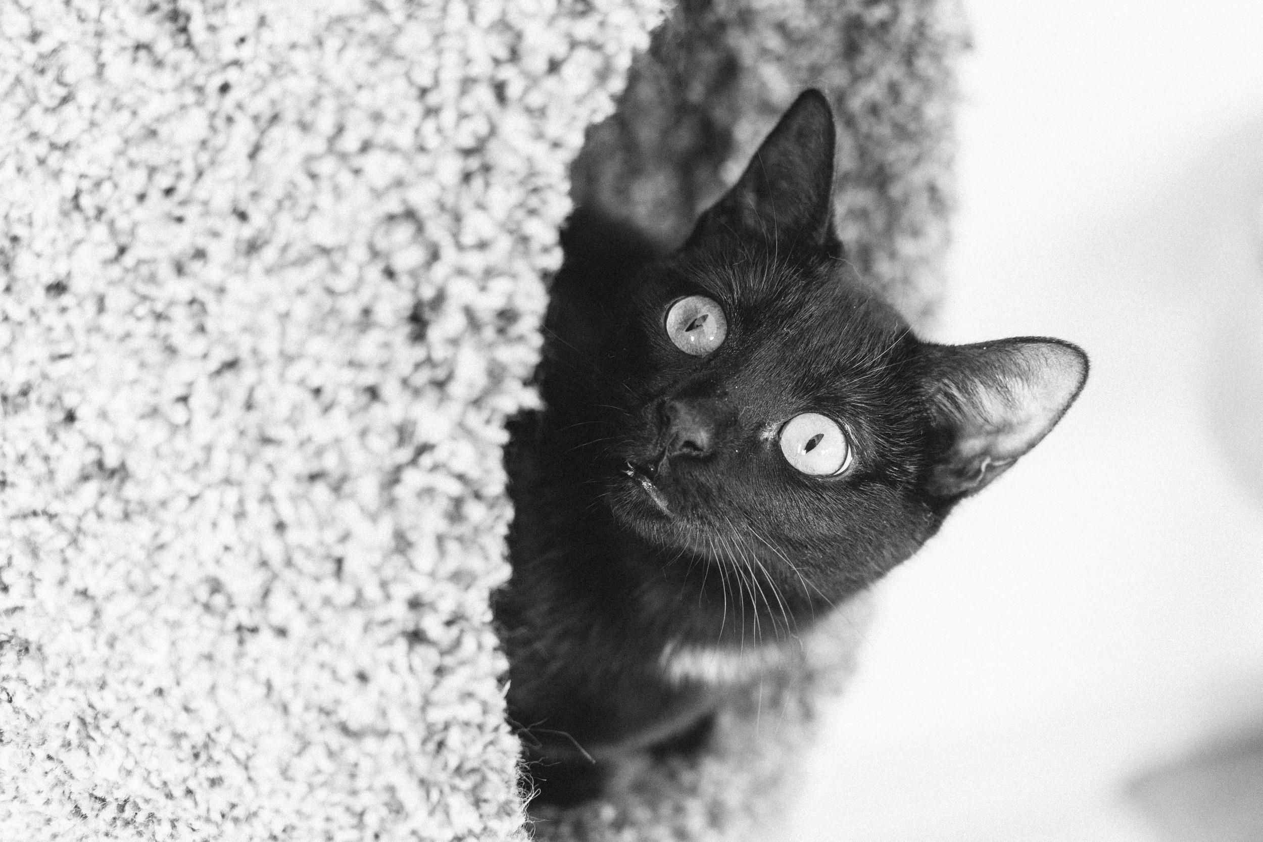 cats-26.jpg