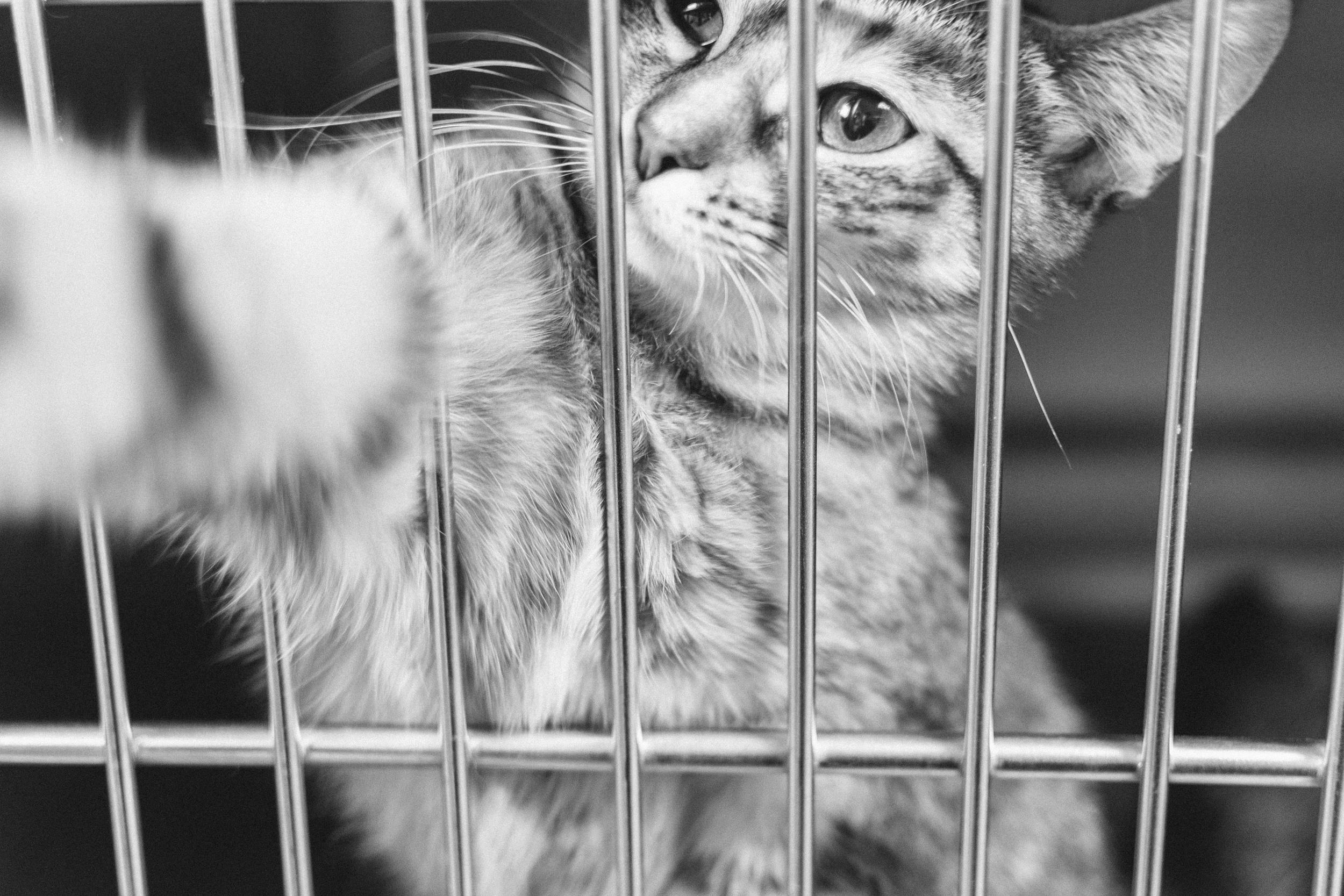 cats-28.jpg
