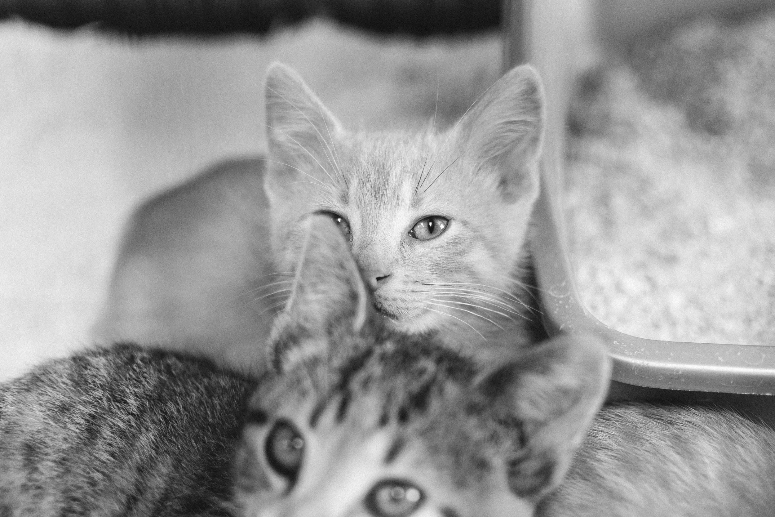 cats-34.jpg