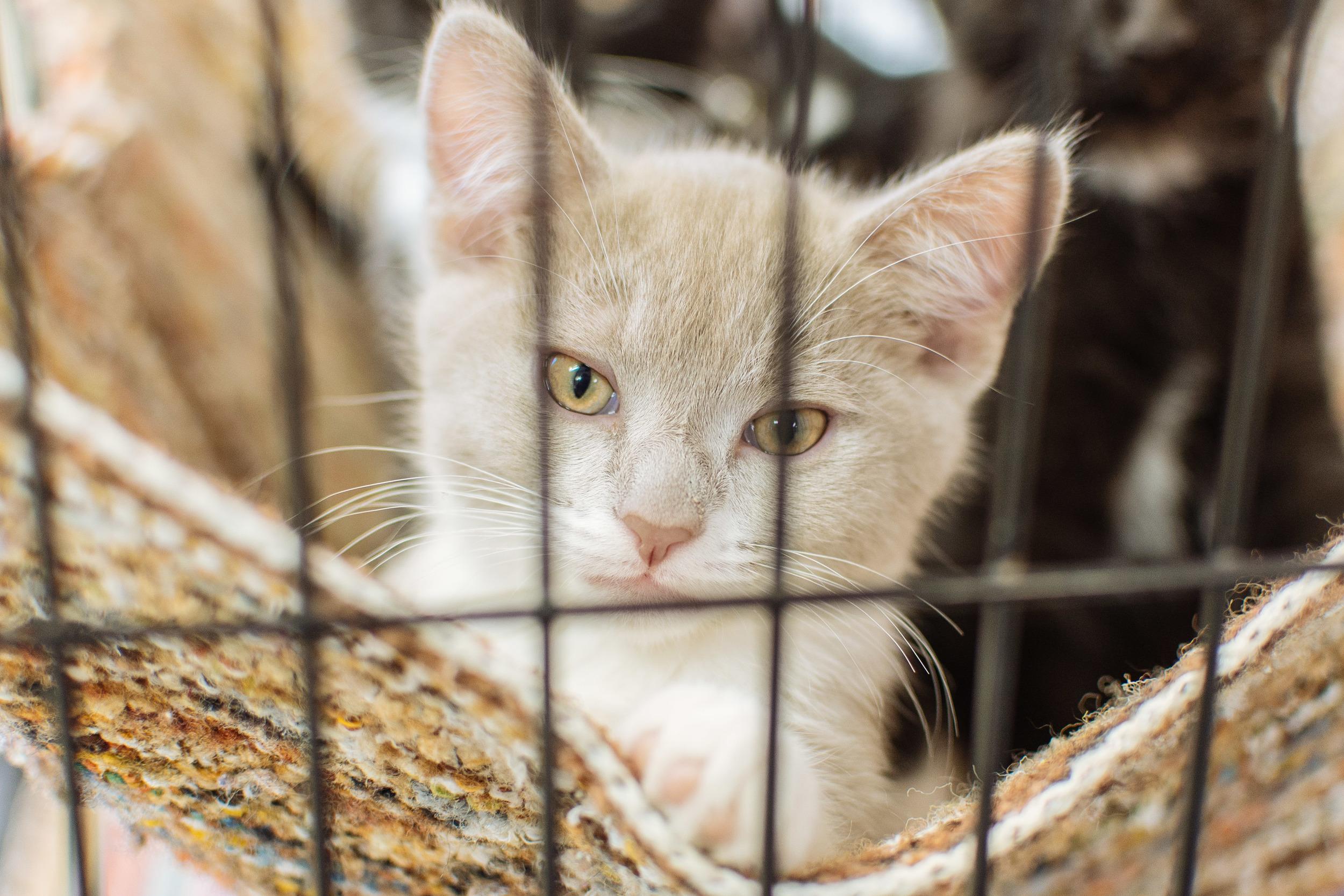 cats-37.jpg